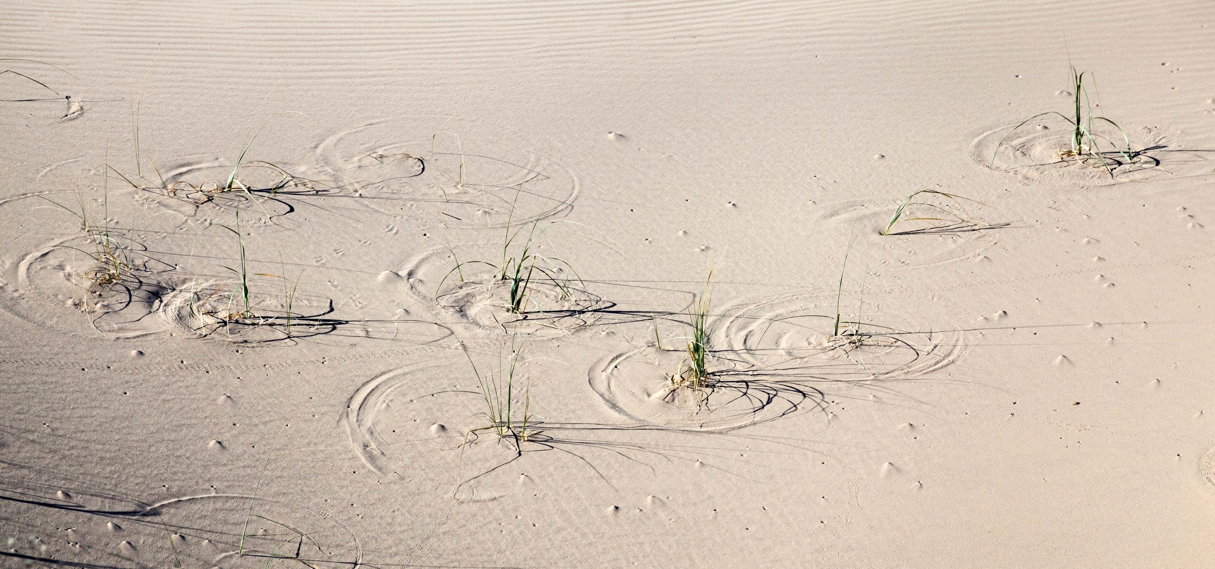 Reed Circles.jpg