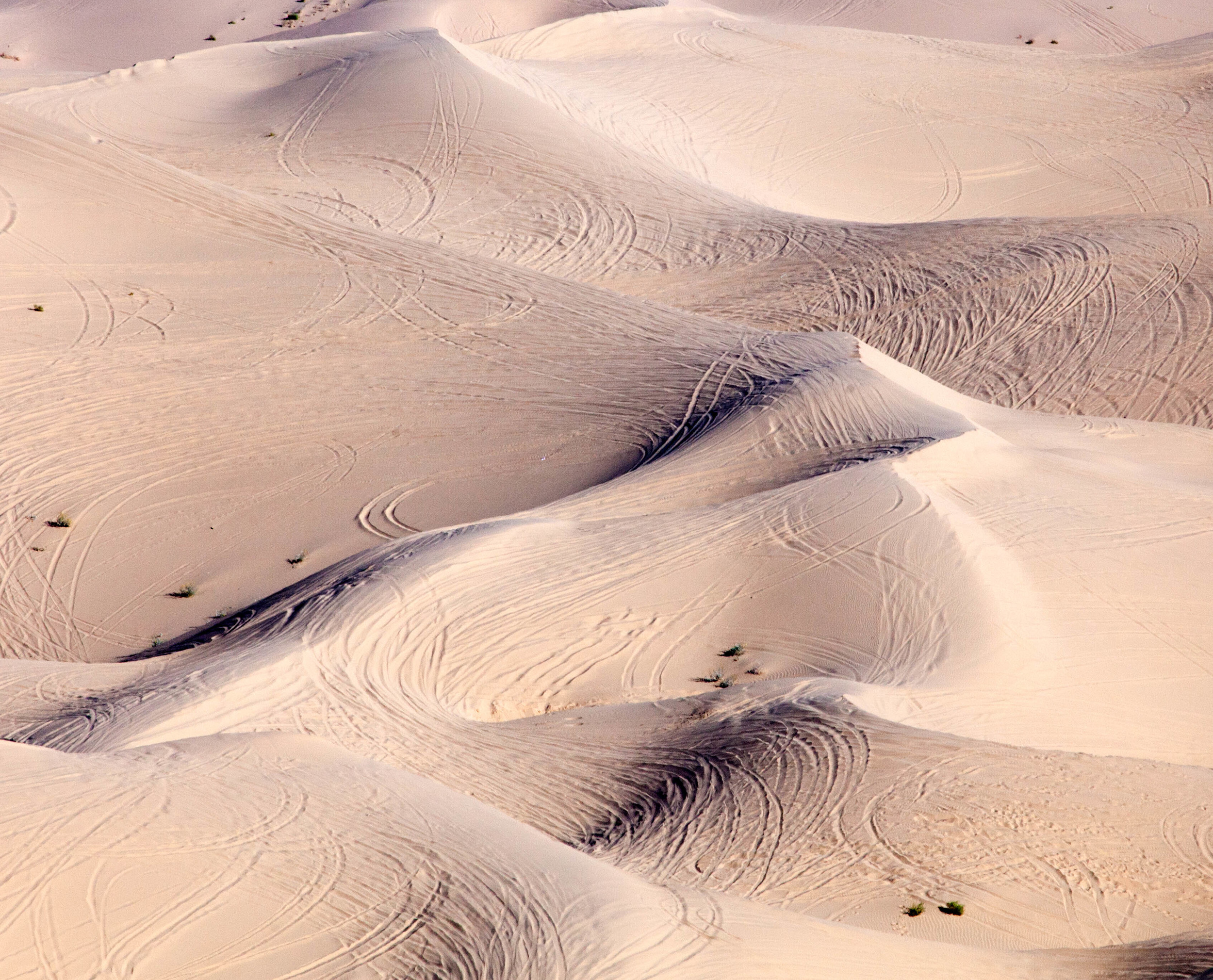 Sand Tracks.jpg