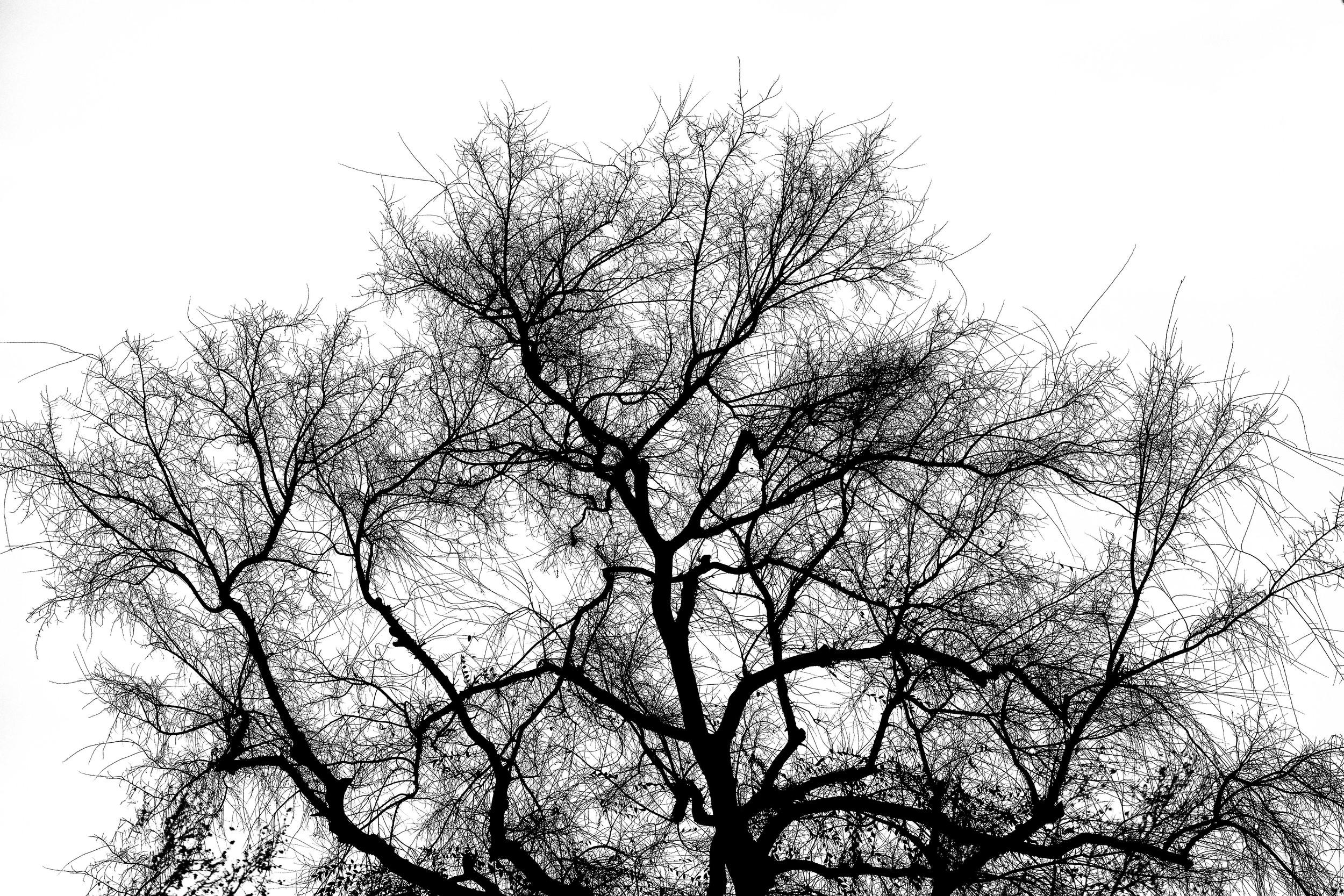 Crazy Twigs.jpg