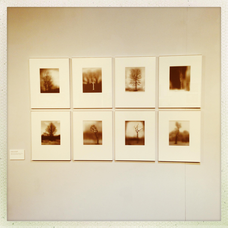 Revelation Through Trees    Imara Moore