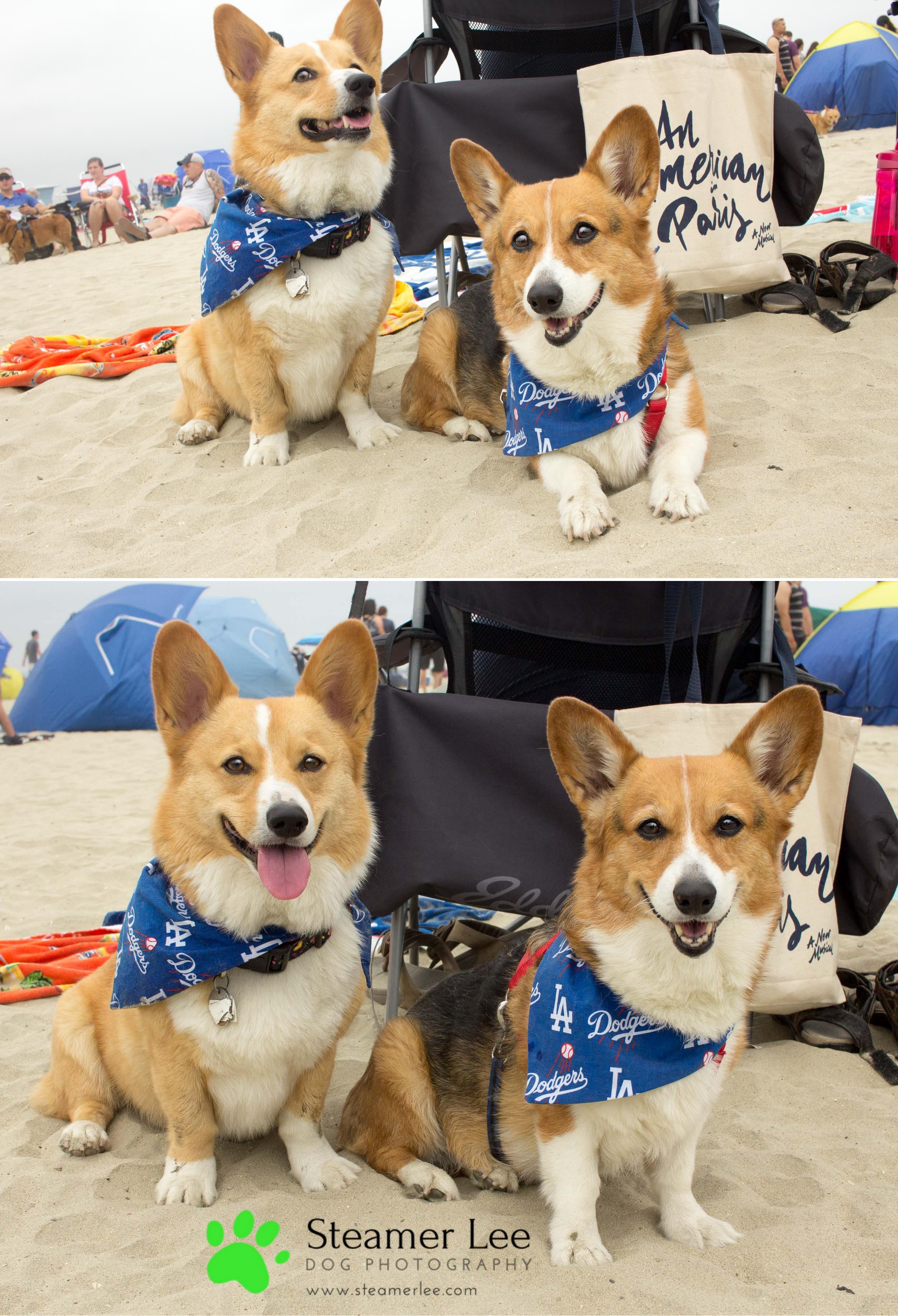 Corgi Beach Day - Vol. 1 20.jpg