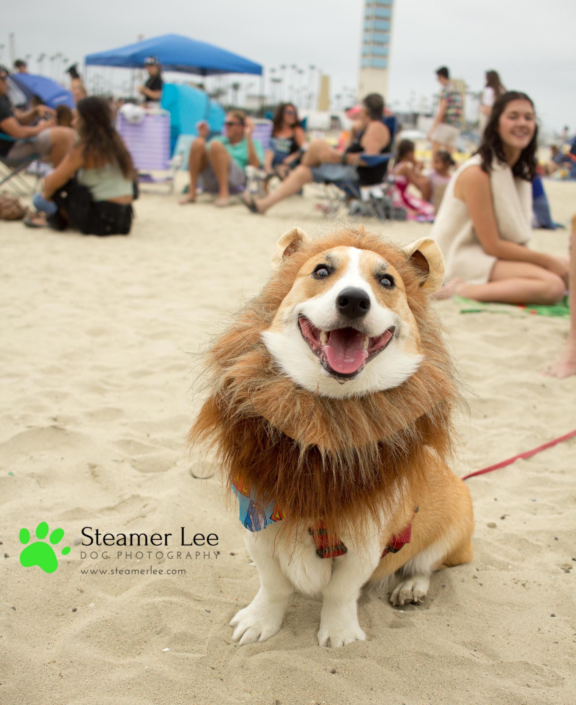 Steamer Lee Dog Photography - July 2017 So Cal Corgi Beach Day - Vol.2 - 18.jpg