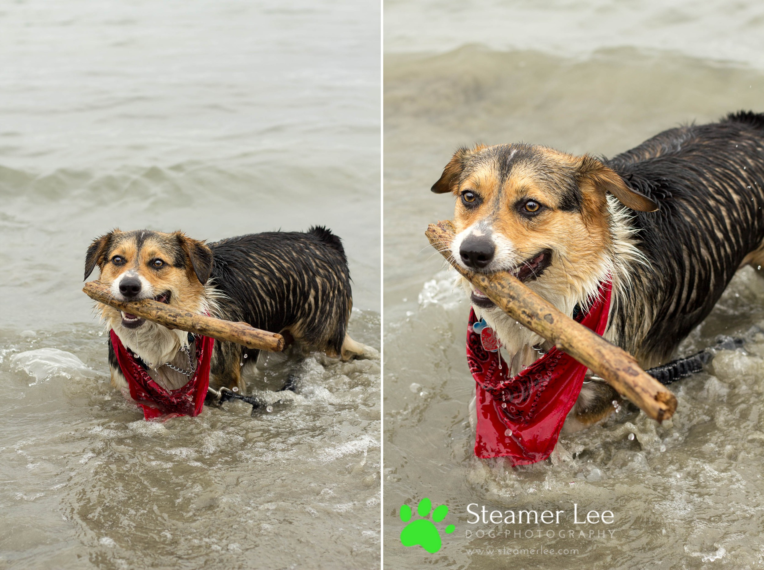 Steamer Lee Dog Photography - July 2017 So Cal Corgi Beach Day - Vol.2 - 4.jpg