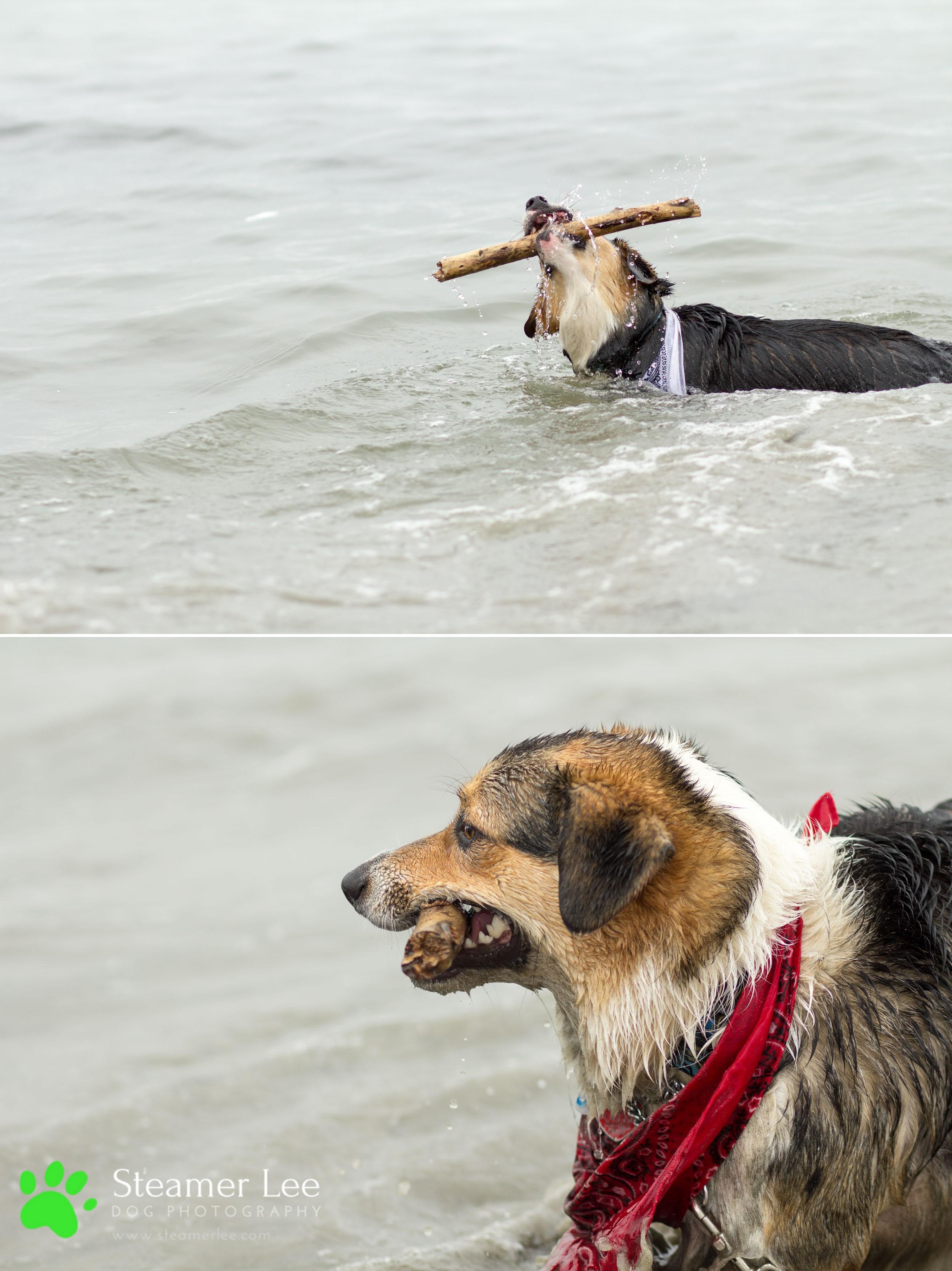 Steamer Lee Dog Photography - July 2017 So Cal Corgi Beach Day - Vol.2 - 11.jpg
