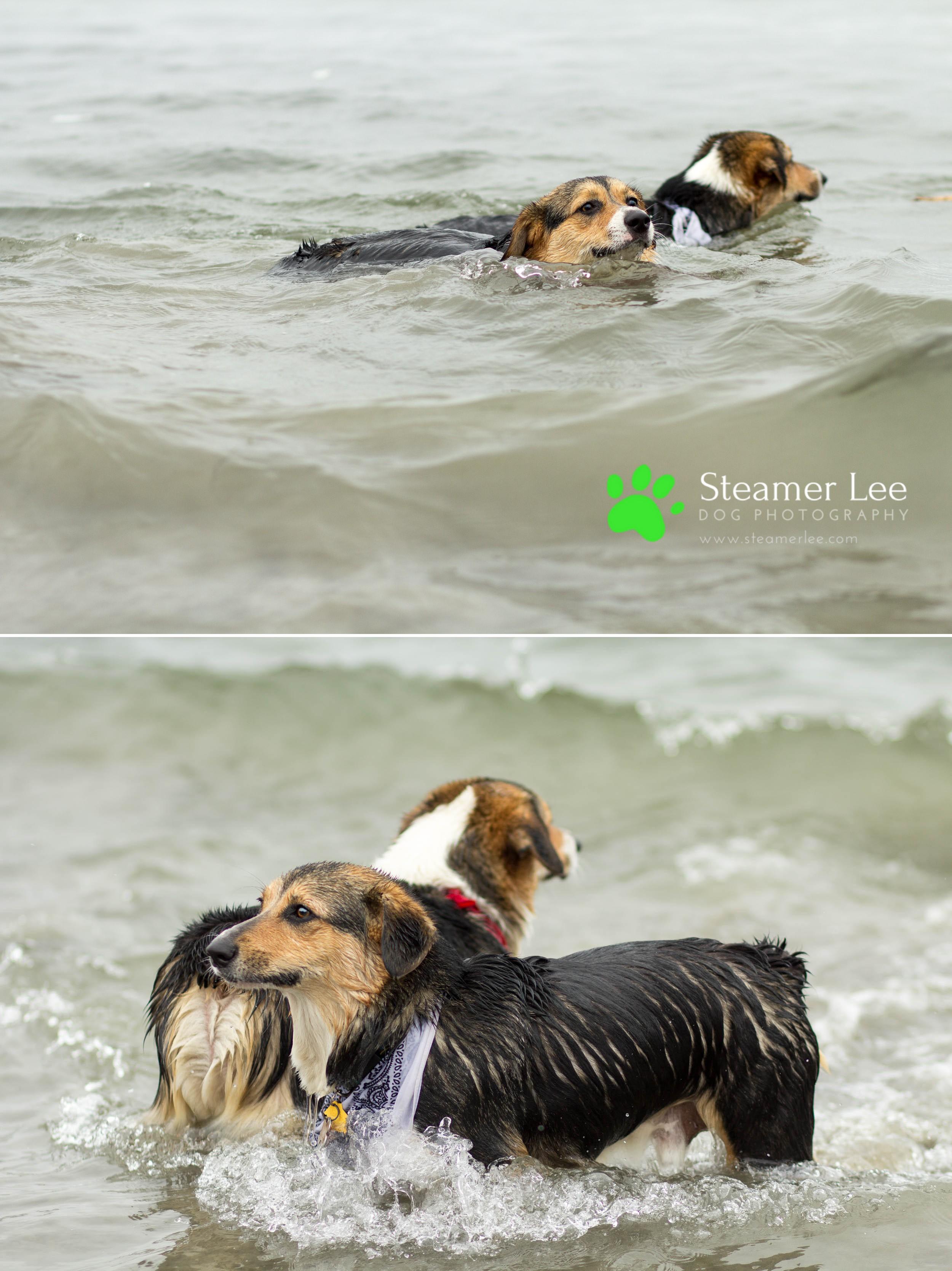 Steamer Lee Dog Photography - July 2017 So Cal Corgi Beach Day - Vol.2 - 13.jpg