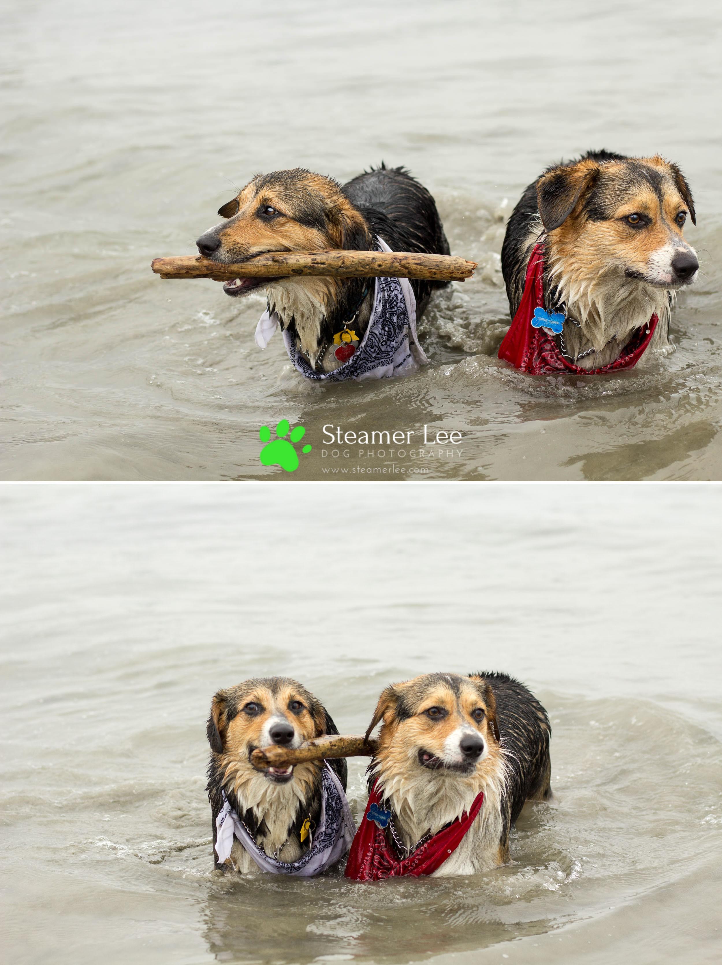 Steamer Lee Dog Photography - July 2017 So Cal Corgi Beach Day - Vol.2 - 6.jpg