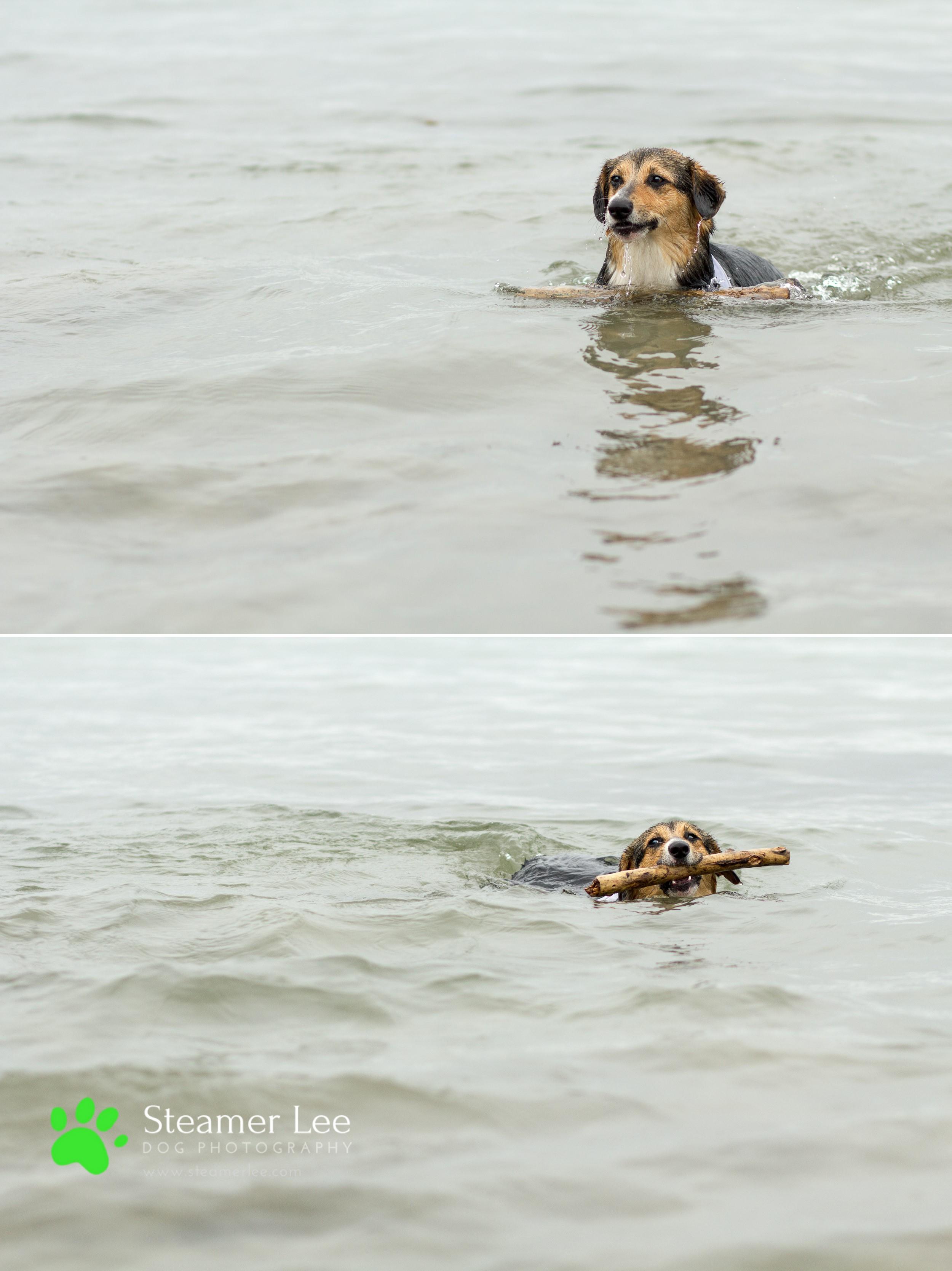 Steamer Lee Dog Photography - July 2017 So Cal Corgi Beach Day - Vol.2 - 9.jpg