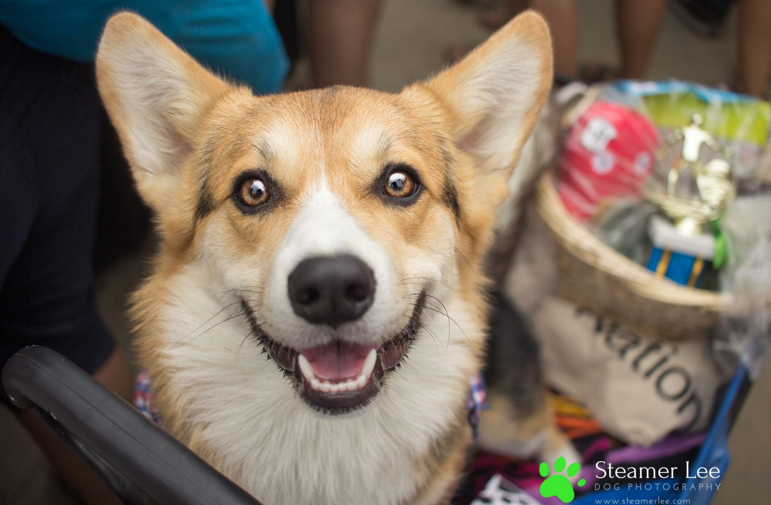 Steamer Lee Dog Photography - July 2017 So Cal Corgi Beach Day - Vol. 3 - 8.jpg