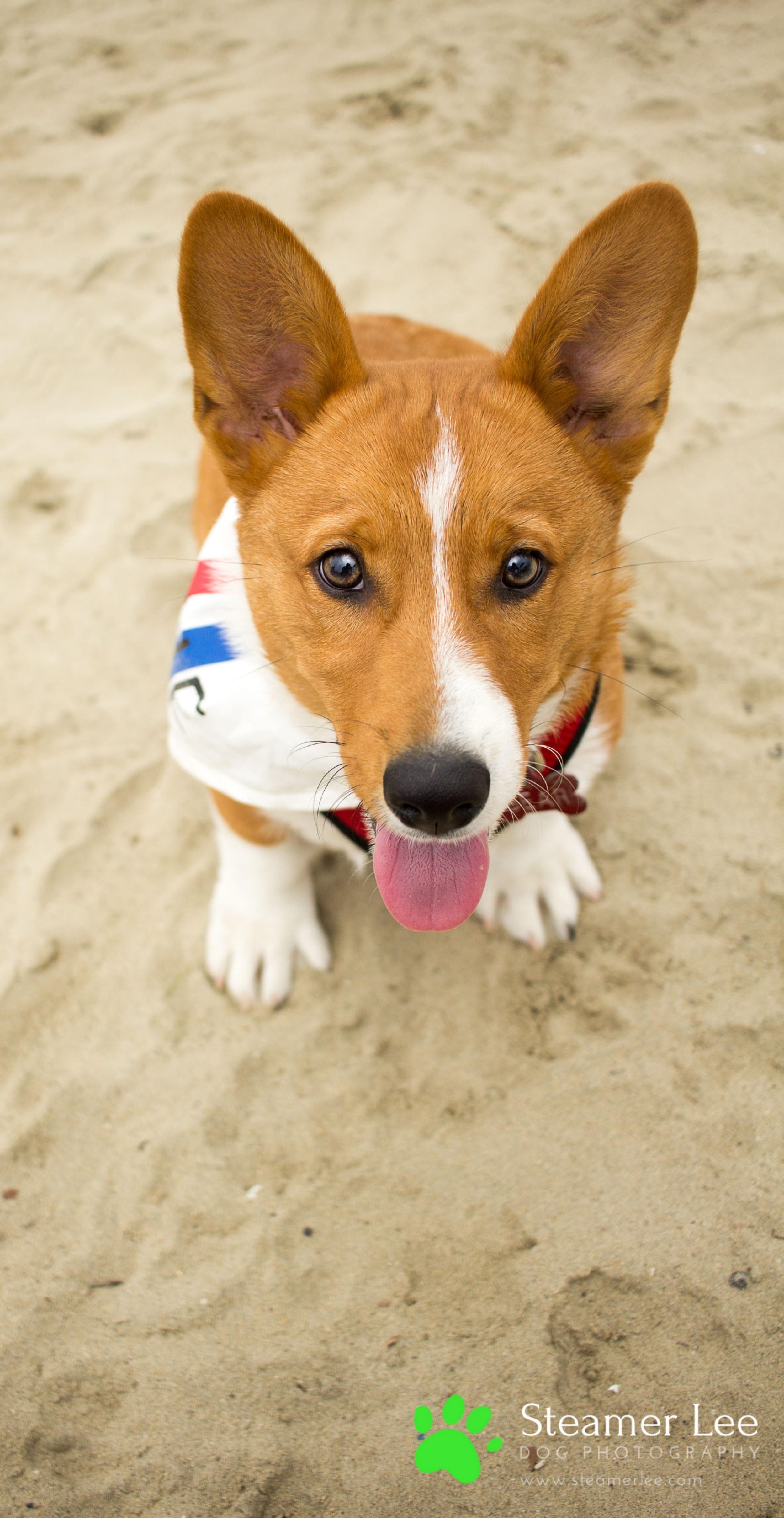 Steamer Lee Dog Photography - July 2017 So Cal Corgi Beach Day - Vol. 3 - 43.jpg