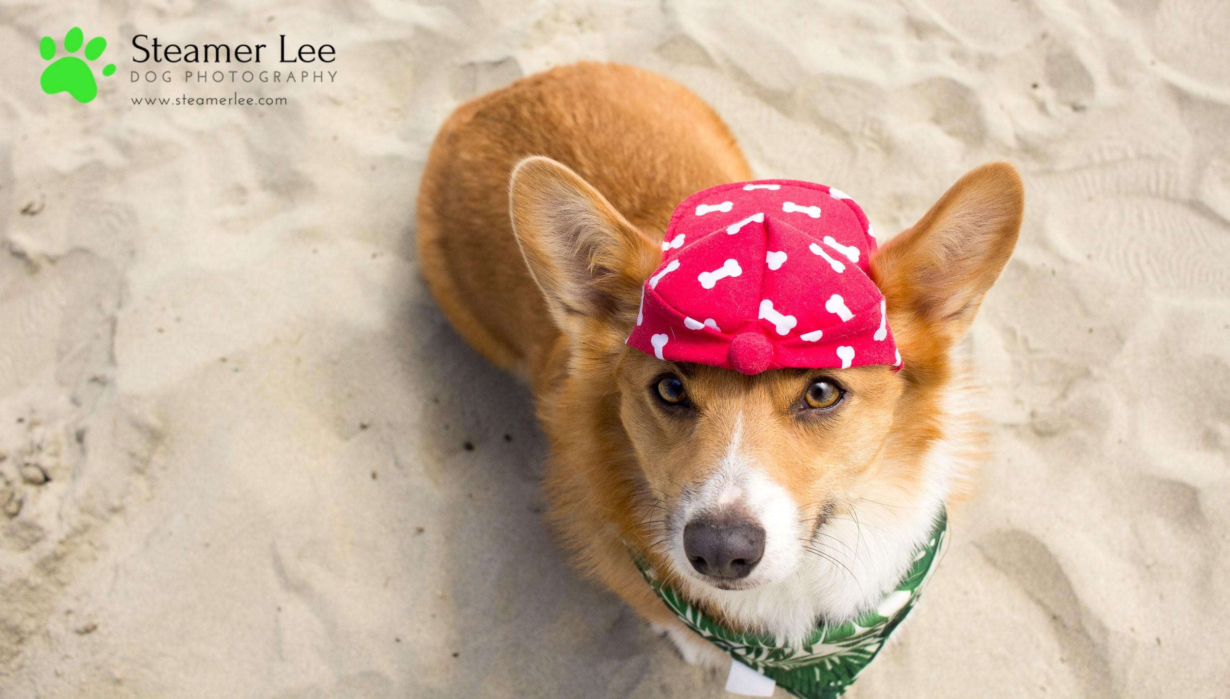 Steamer Lee Dog Photography - July 2017 So Cal Corgi Beach Day - Vol. 3 - 25.jpg