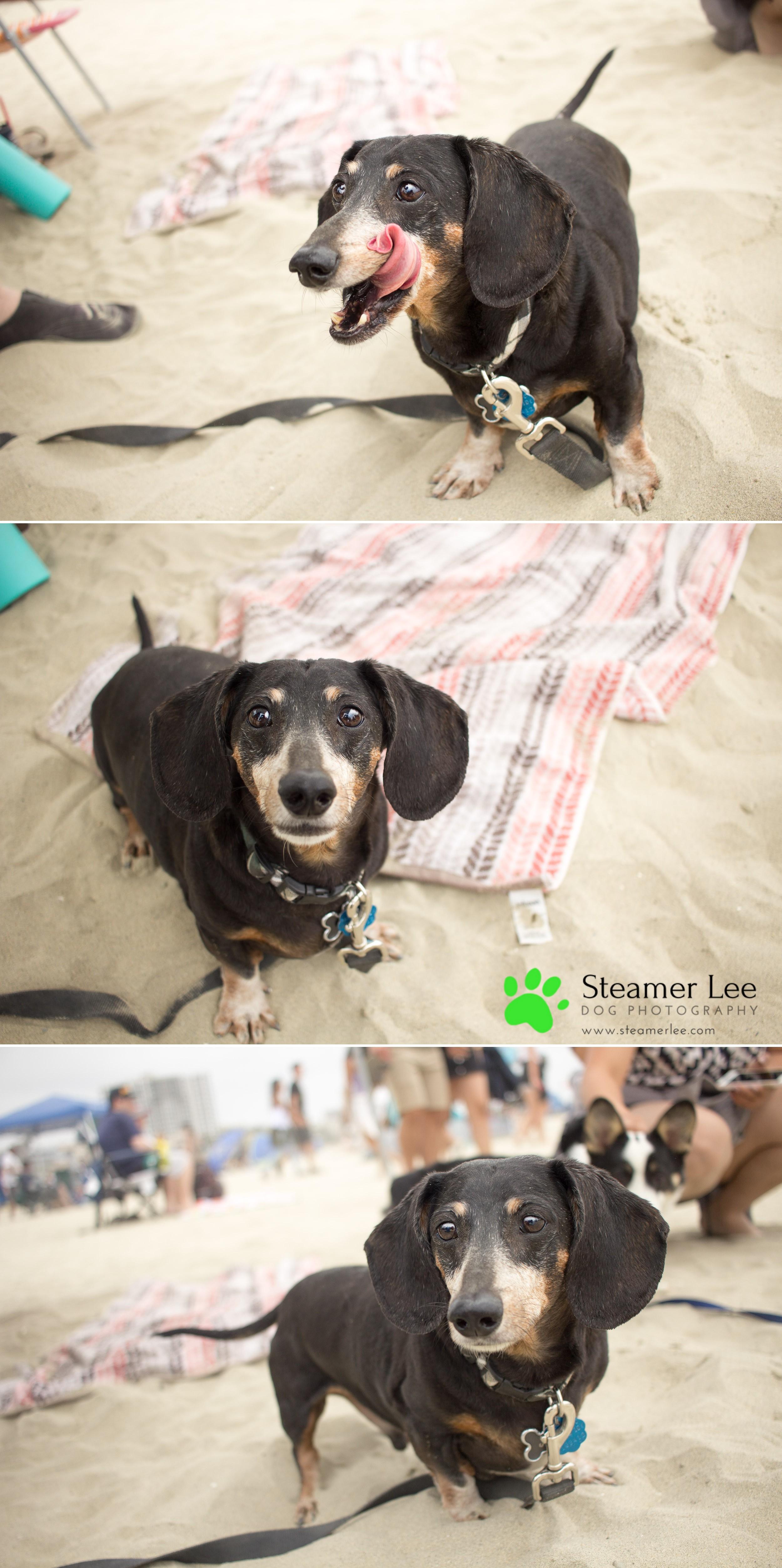 Steamer Lee Dog Photography - July 2017 So Cal Corgi Beach Day - Vol. 3 - 6.jpg