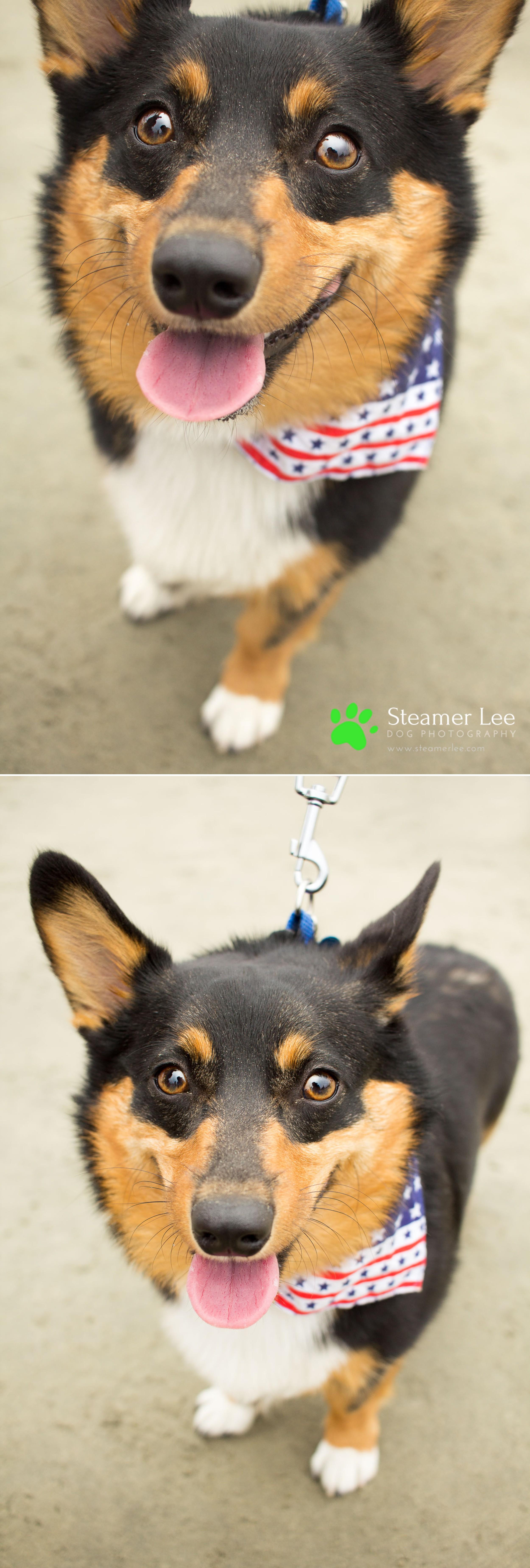 Steamer Lee Dog Photography - July 2017 So Cal Corgi Beach Day - Vol. 3 - 33.jpg