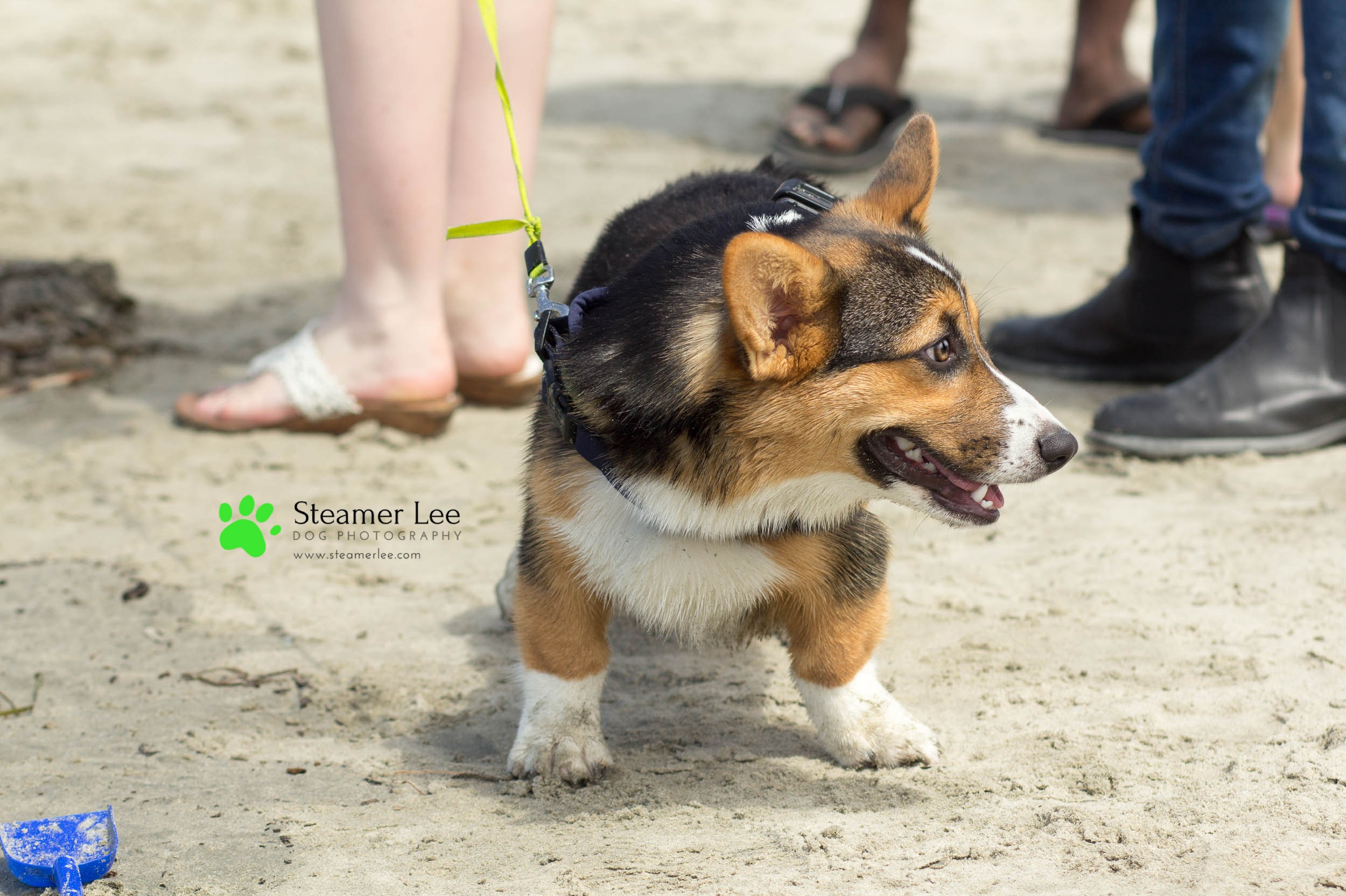Steamer Lee Dog Photography - July 2017 So Cal Corgi Beach Day - Vol. 3 - 14.jpg