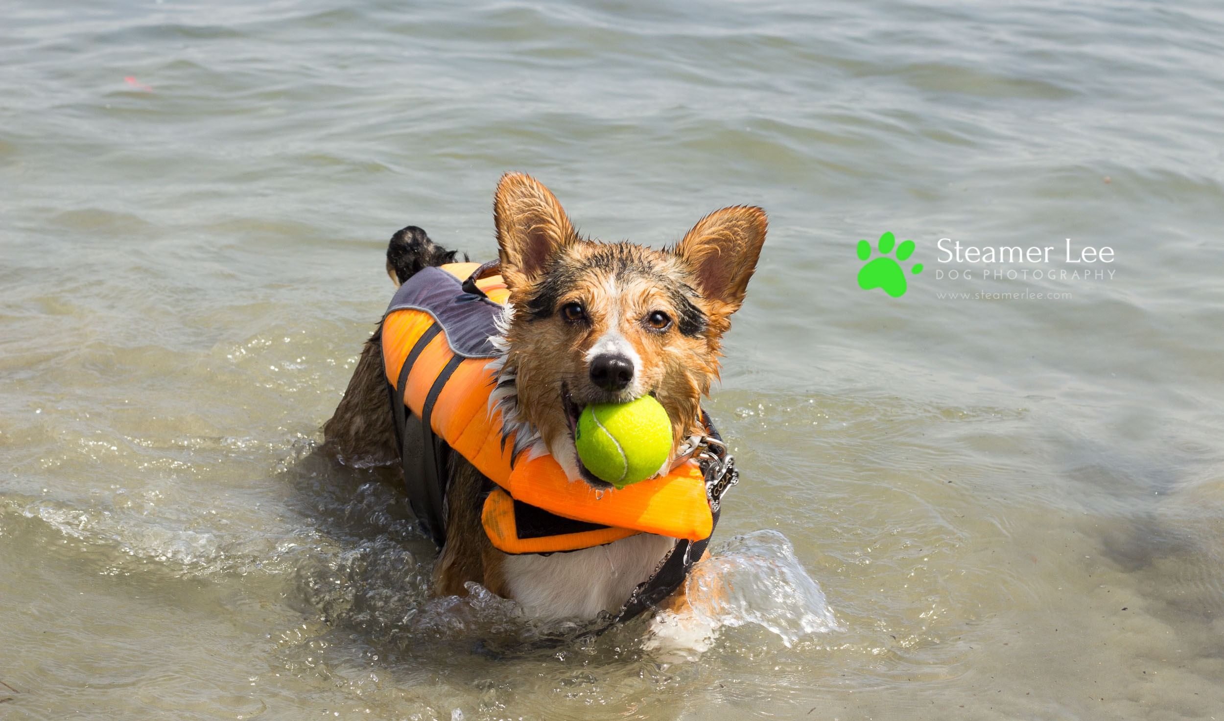 Steamer Lee Dog Photography - July 2017 So Cal Corgi Beach Day - Vol. 3 - 11.jpg