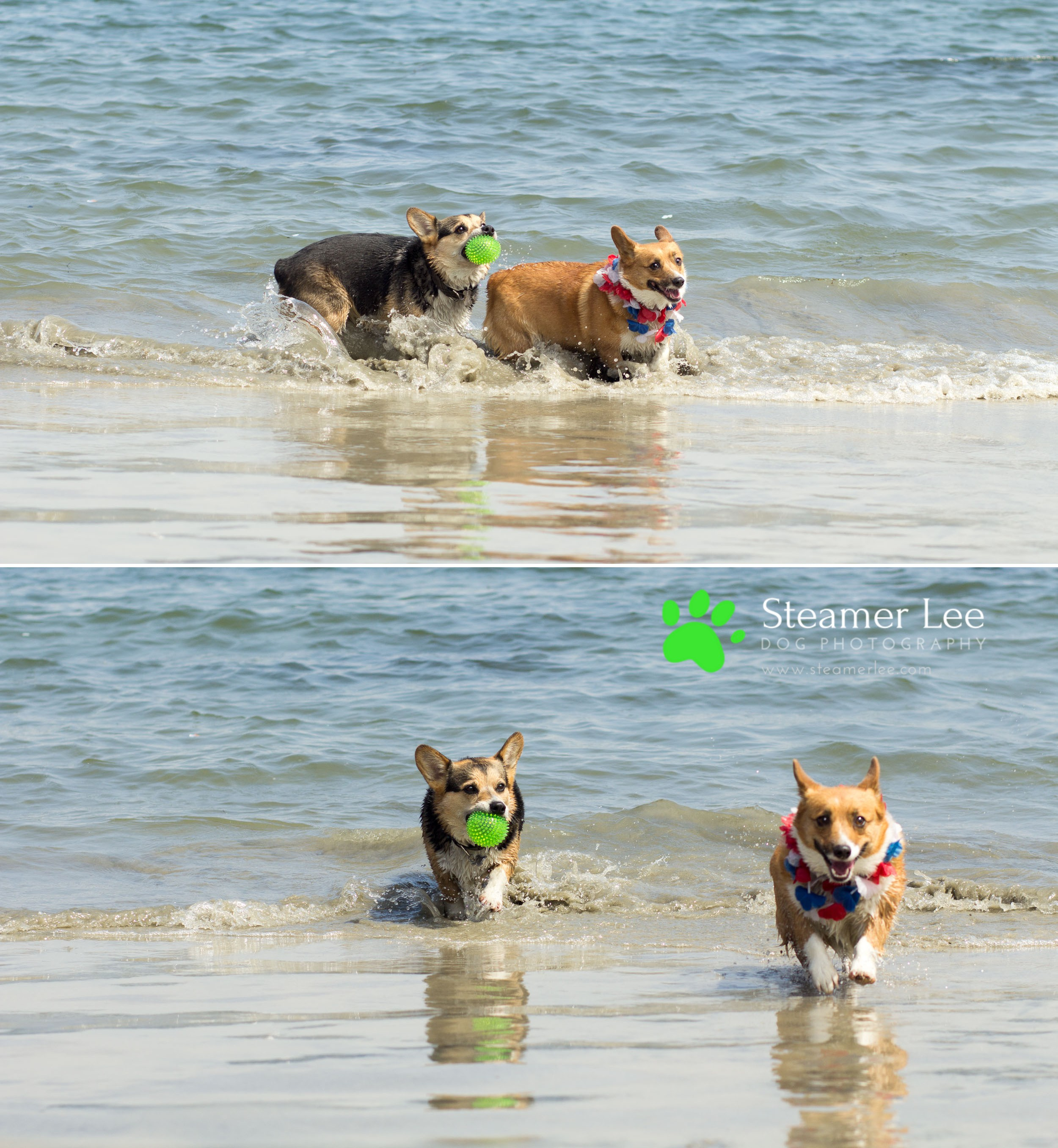 Steamer Lee Dog Photography - July 2017 So Cal Corgi Beach Day - Vol. 3 - 15.jpg