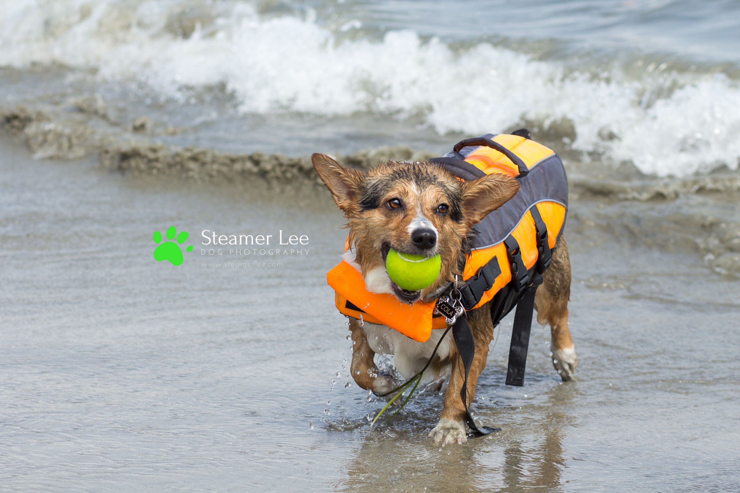 Steamer Lee Dog Photography - July 2017 So Cal Corgi Beach Day - Vol. 3 - 12.jpg