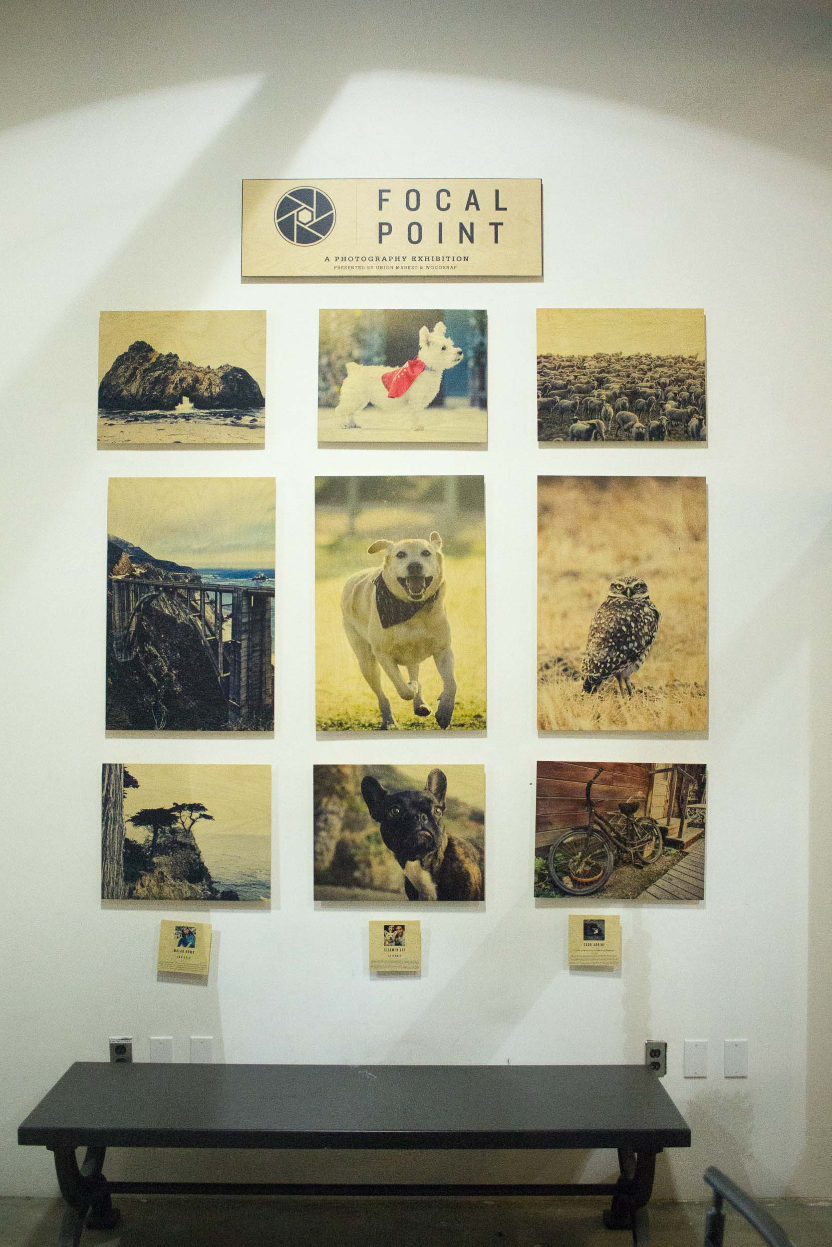 Steamer Lee Dog Photography - Focal Point Mission Viejo WoodSnap Exhibit - 1.jpg