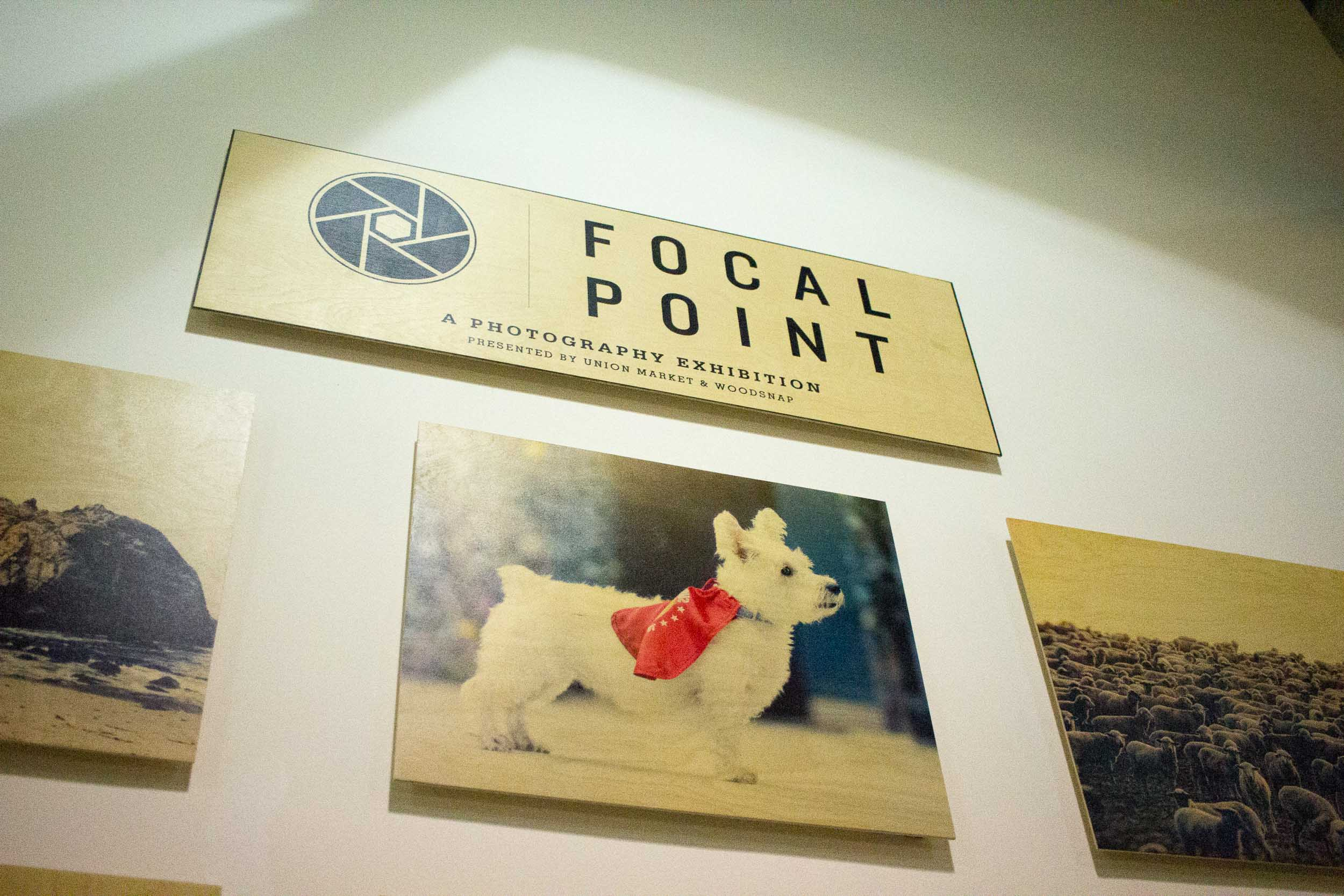 Steamer Lee Dog Photography - Focal Point Mission Viejo WoodSnap Exhibit - 12.jpg