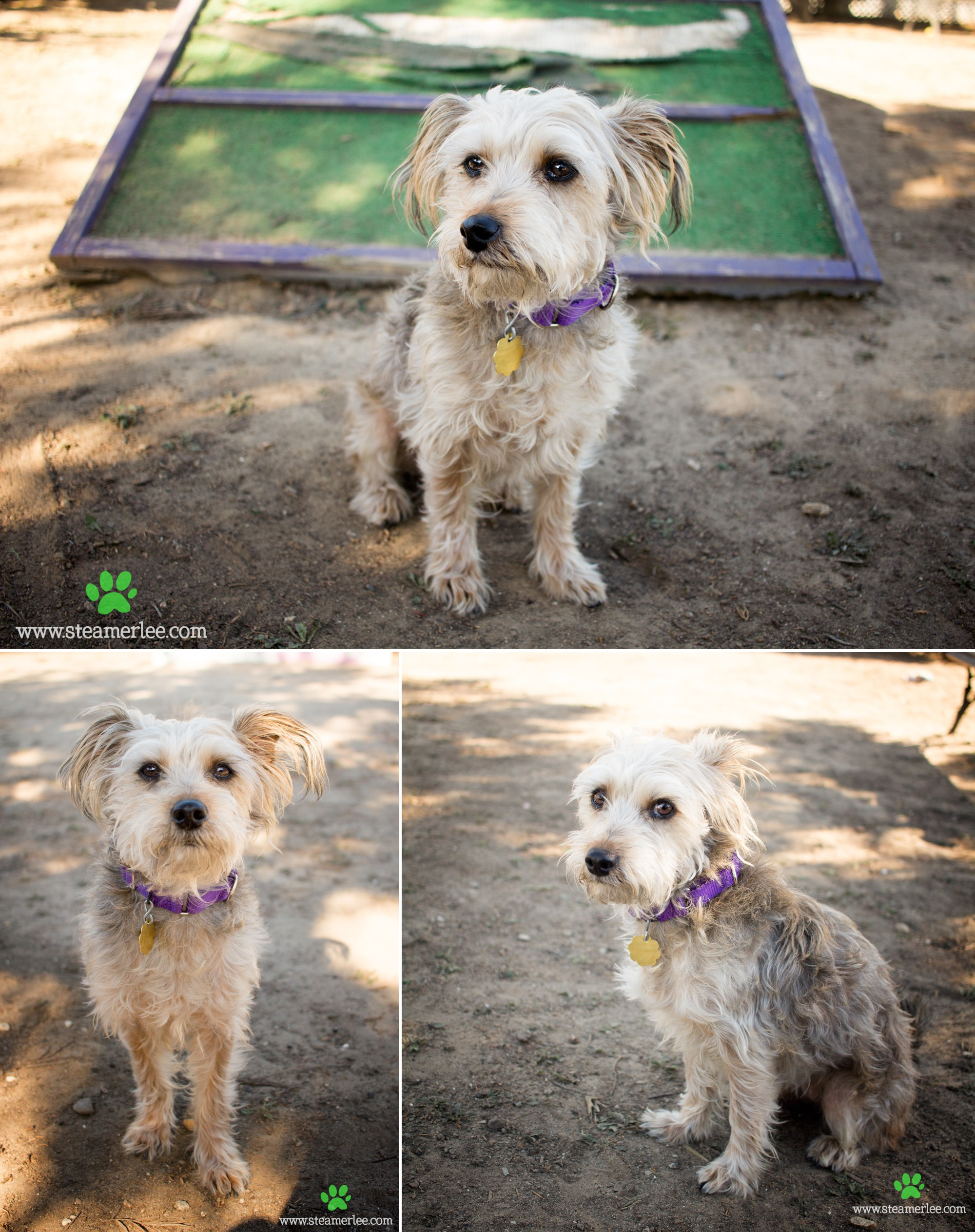 11 Steamer Lee Dog Photography - Seal Beach Animal Care Center.JPG