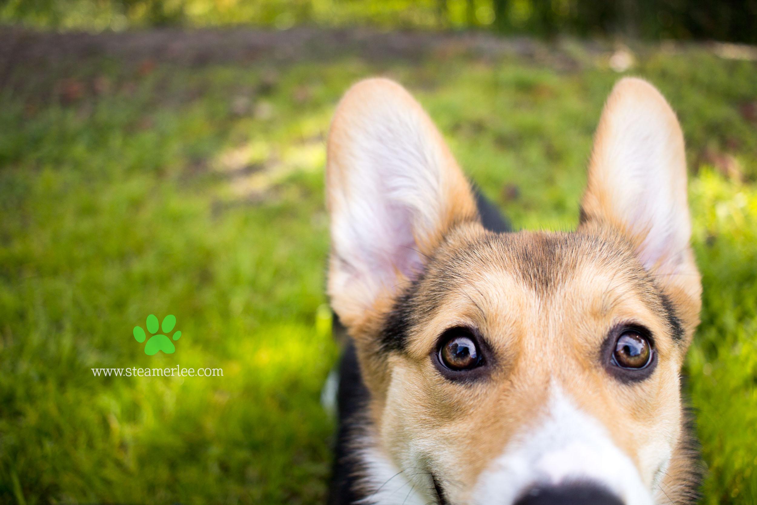 18 Steamer Lee Dog Photography -1.jpg