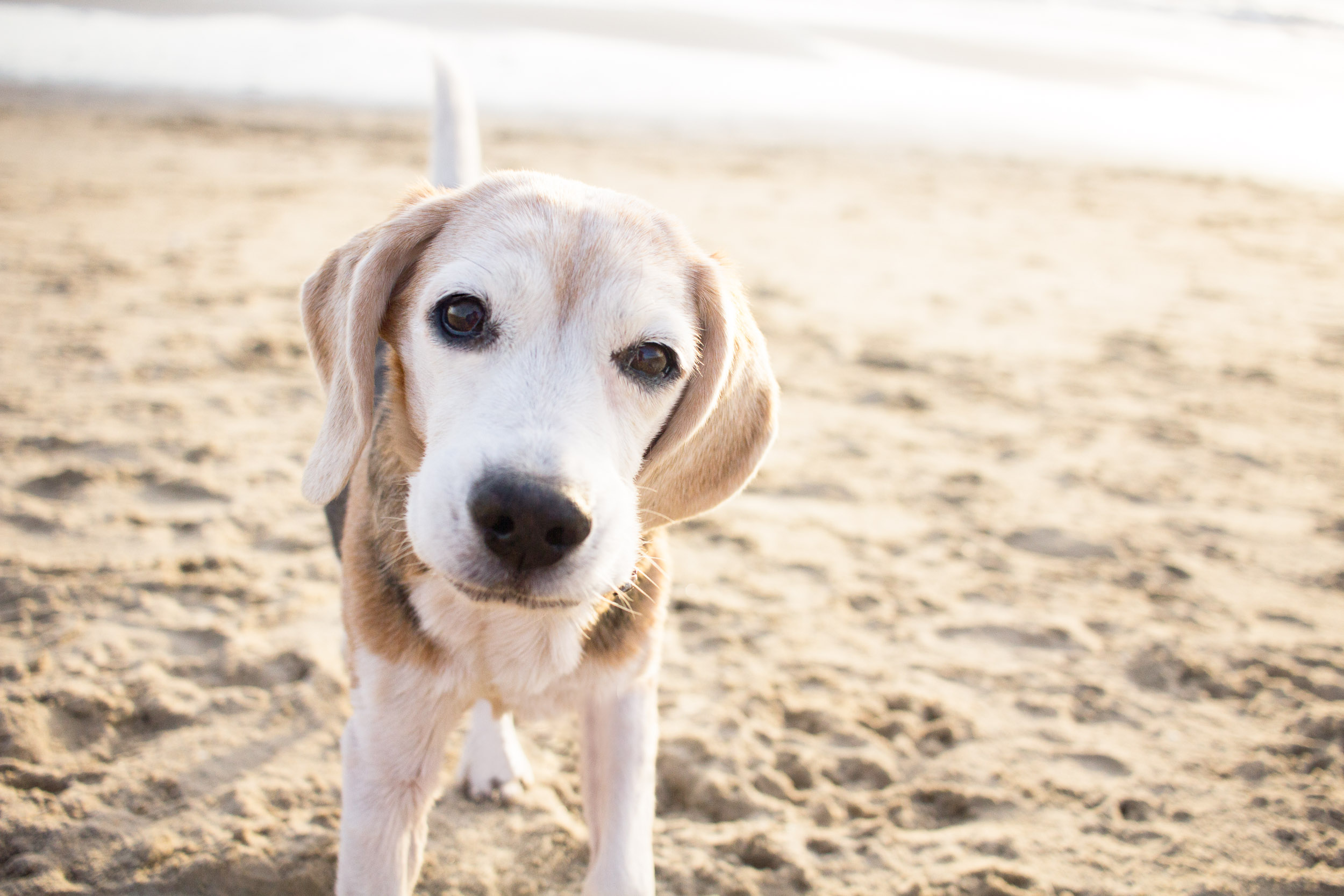 02-Orange-County-Dog-Photography-Pet-Huntington-Dog-Beach-Megan.JPG