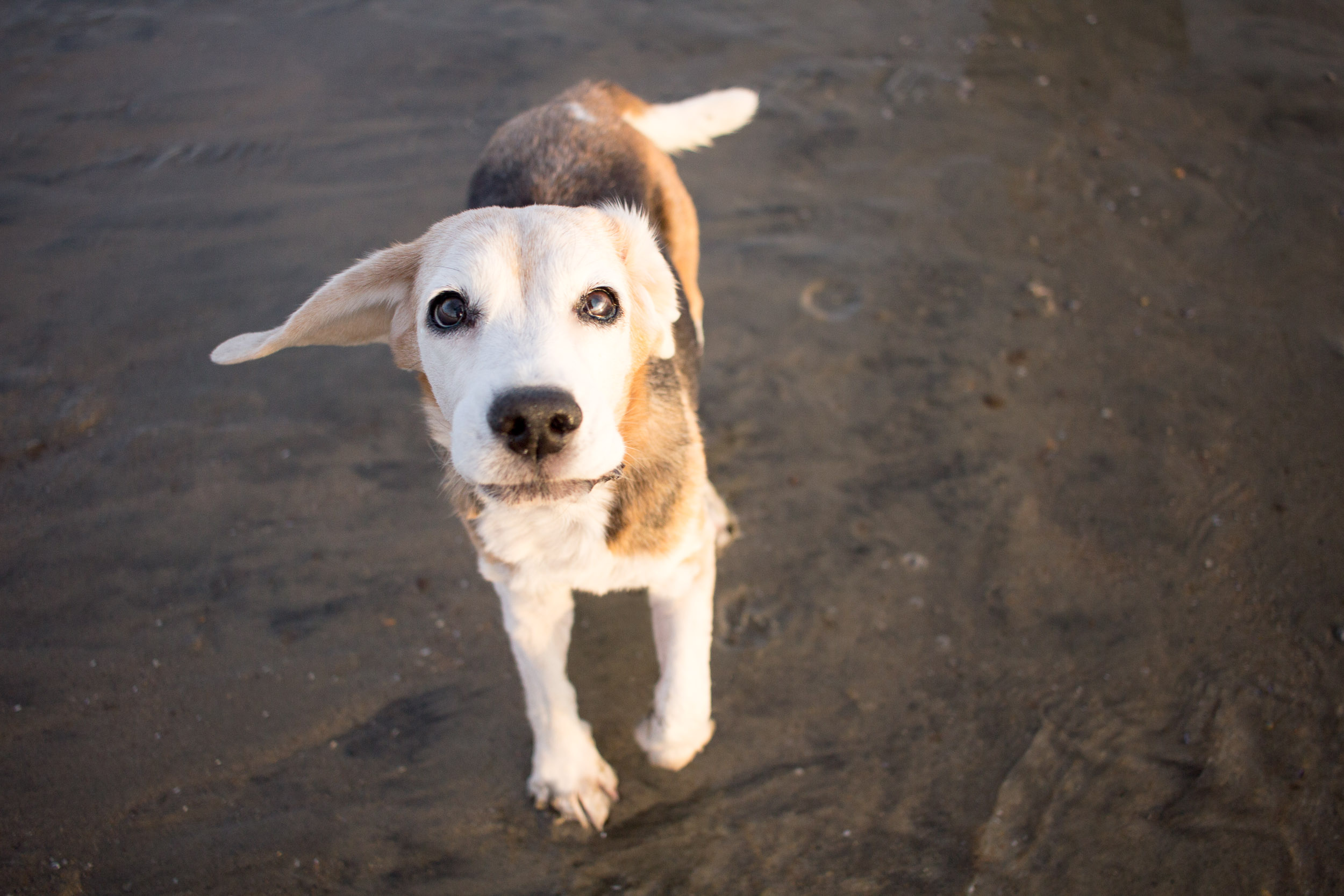 12-Orange-County-Dog-Photography-Pet-Huntington-Dog-Beach-Megan.JPG
