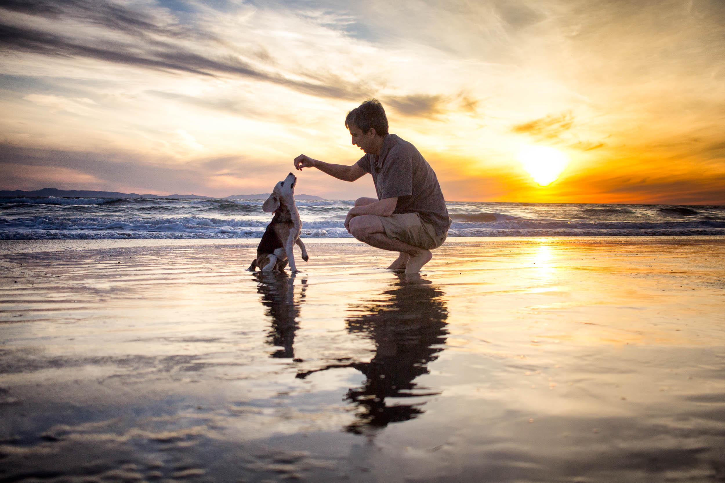16-Orange-County-Dog-Photography-Pet-Huntington-Dog-Beach-Megan.JPG
