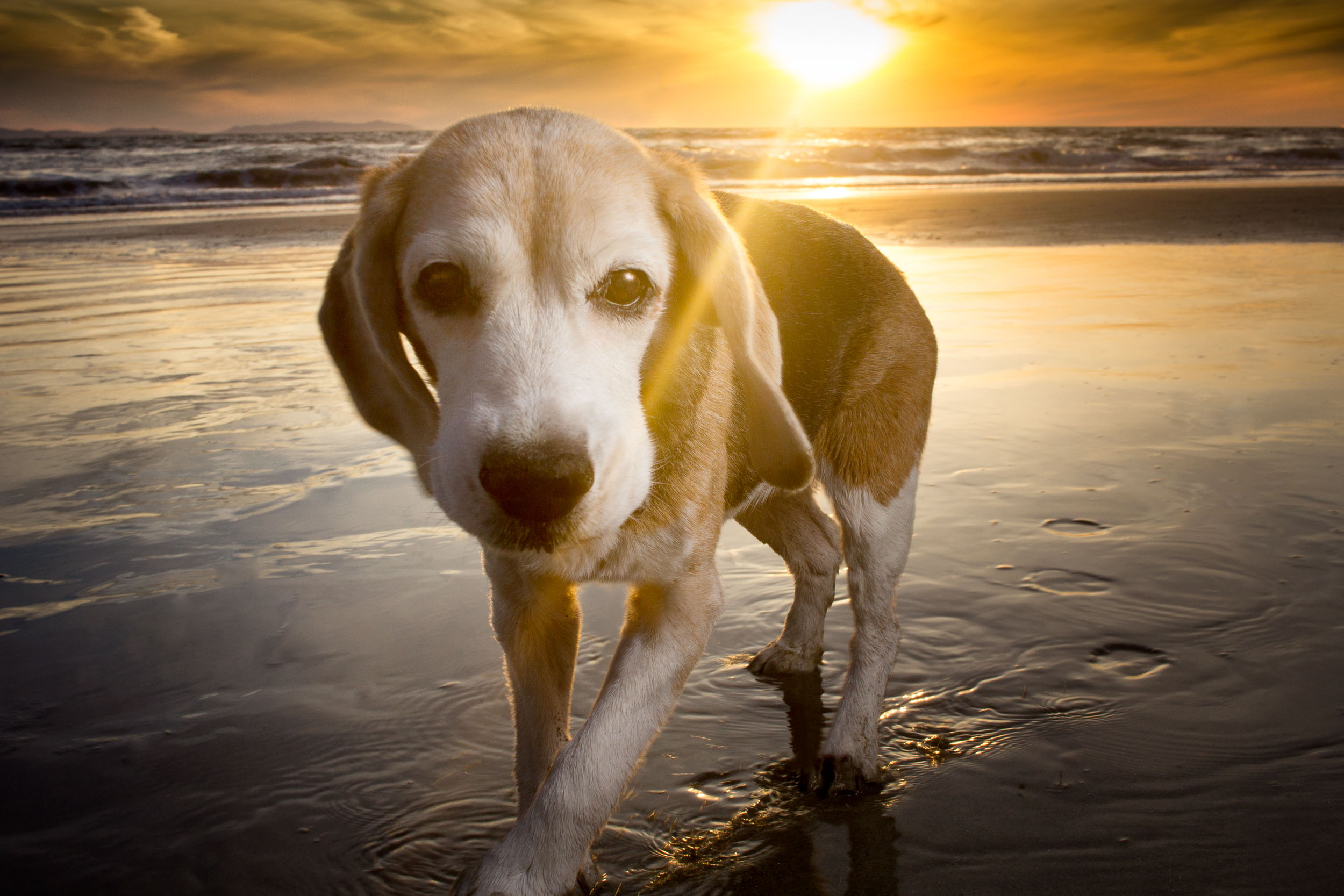 18-Orange-County-Dog-Photography-Pet-Huntington-Dog-Beach-Megan.JPG