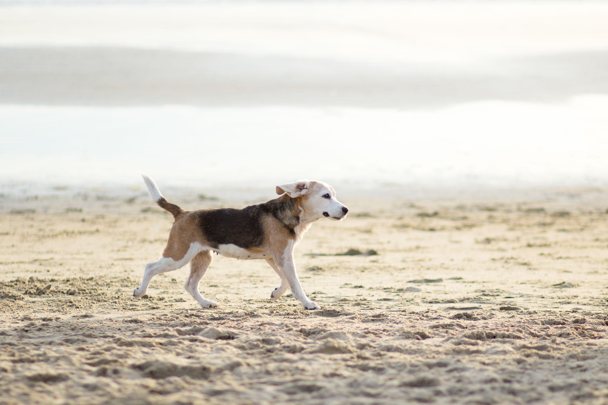 20-Orange-County-Dog-Photography-Pet-Huntington-Dog-Beach-Megan.jpg