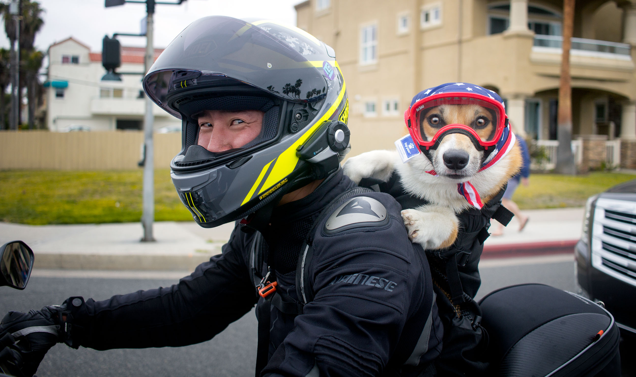 This Corgi is Atticus, and he likes to arrive to the party in style. I was crossing the cross-walk, and this little guy and his human pulled up. Of course, I stopped (safely) in the middle of the street to document this moment. You can follow Atticus' motorbike journey on Instagram  here . He's so cool!