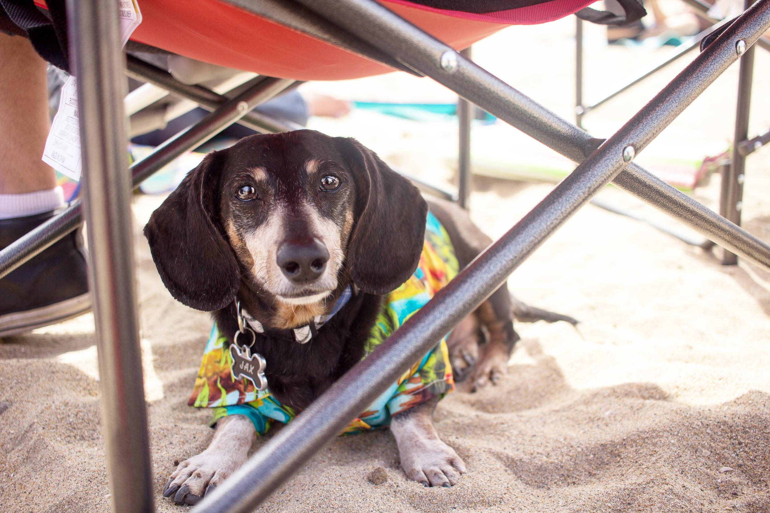 Orange-County-Dog-Photography-Pet-Huntington-Dog-Beach-SoCal-Corgi-Beach-Day_Steamer-Lee_021.JPG