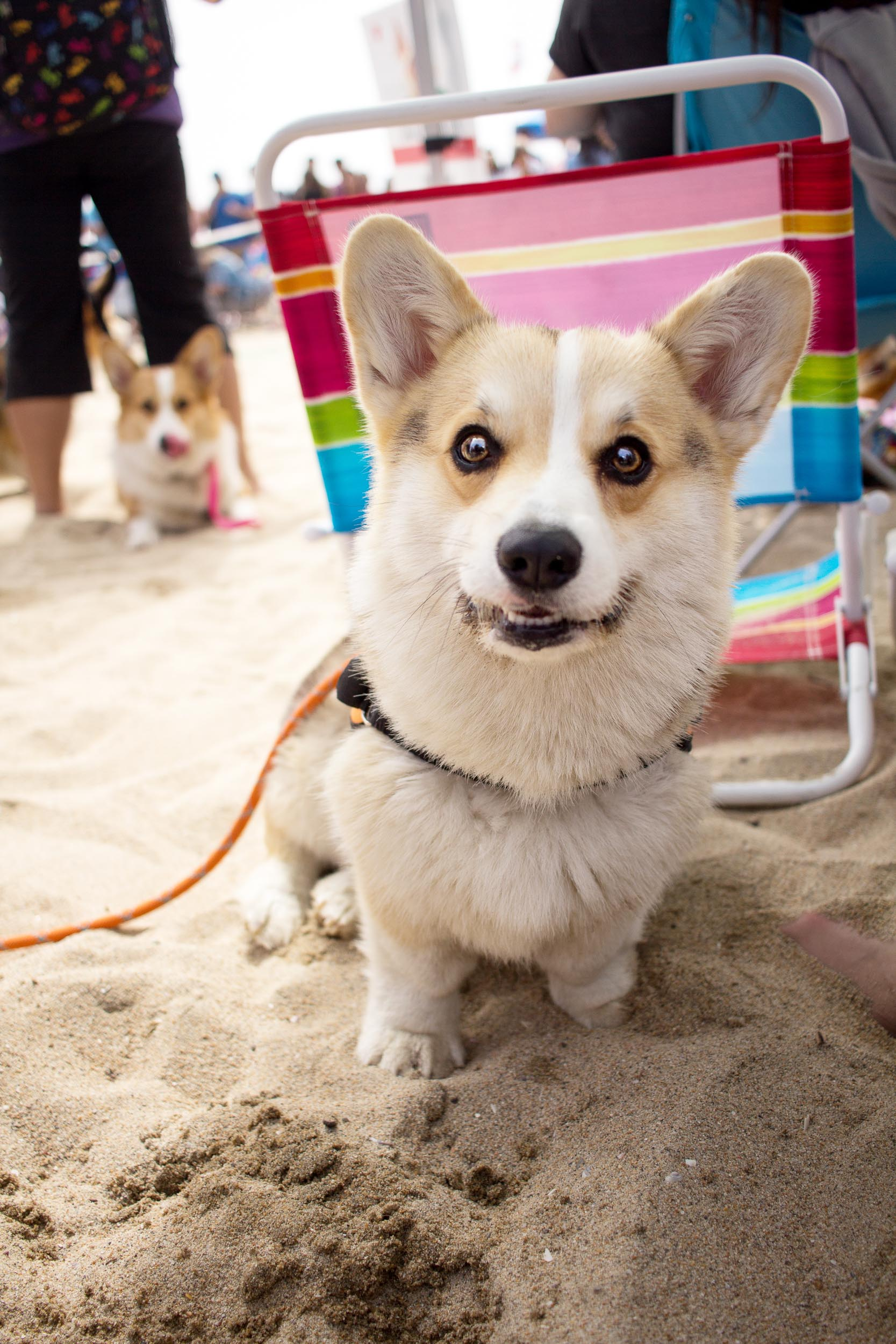 Orange-County-Dog-Photography-Pet-Huntington-Dog-Beach-SoCal-Corgi-Beach-Day_Steamer-Lee_027.JPG