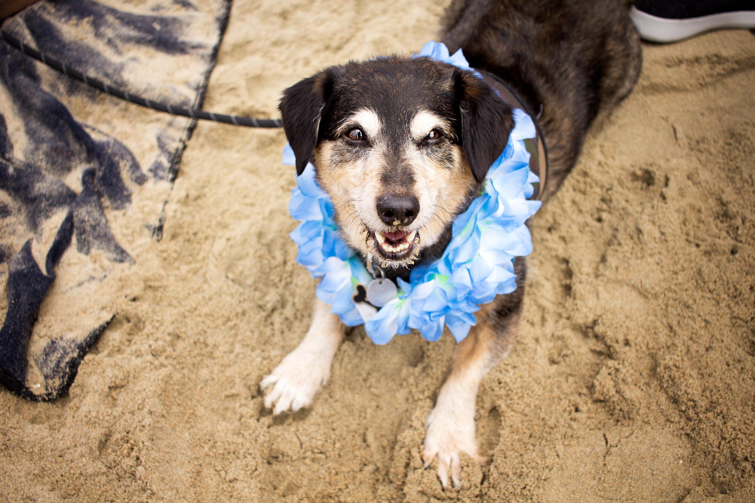 Orange-County-Dog-Photography-Pet-Huntington-Dog-Beach-SoCal-Corgi-Beach-Day_Steamer-Lee_029.JPG