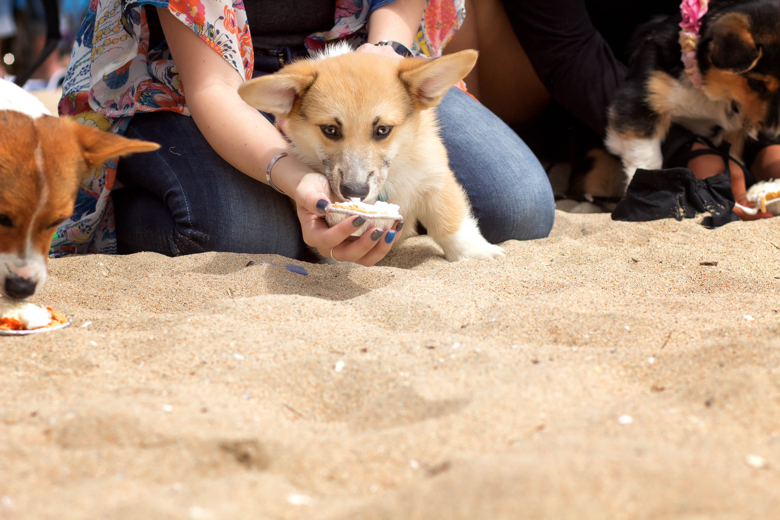 Orange-County-Dog-Photography-Pet-Huntington-Dog-Beach-SoCal-Corgi-Beach-Day_Steamer-Lee_035.JPG