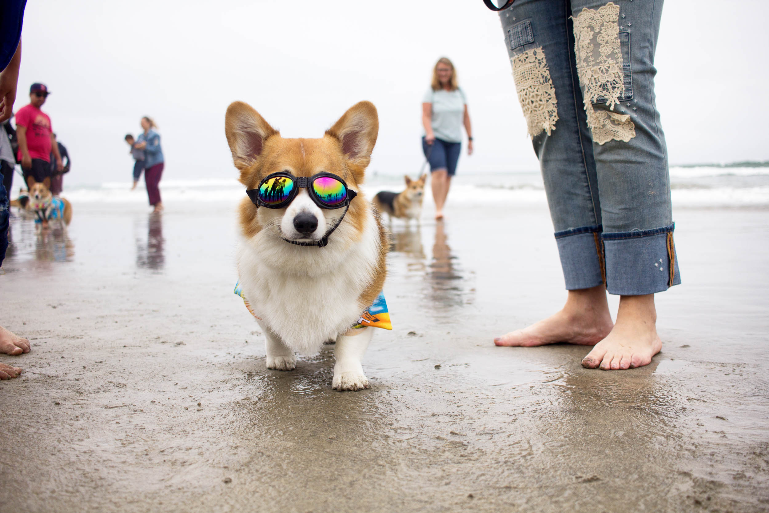 Orange-County-Dog-Photography-Pet-Huntington-Dog-Beach-SoCal-Corgi-Beach-Day_Steamer-Lee_048.JPG