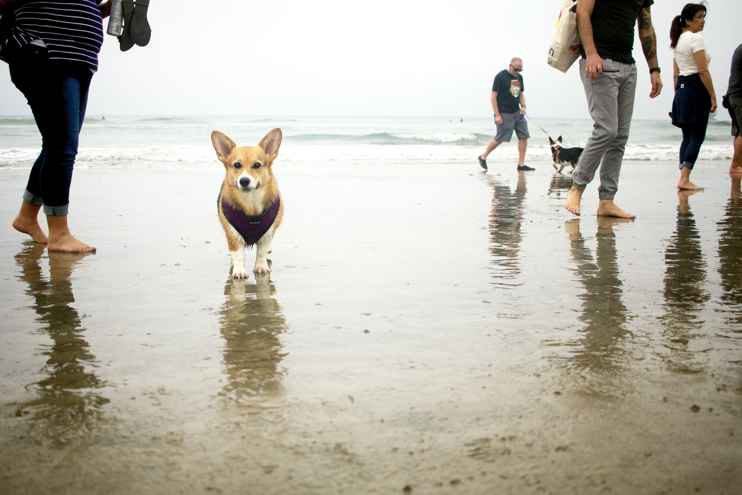 Orange-County-Dog-Photography-Pet-Huntington-Dog-Beach-SoCal-Corgi-Beach-Day_Steamer-Lee_051.JPG