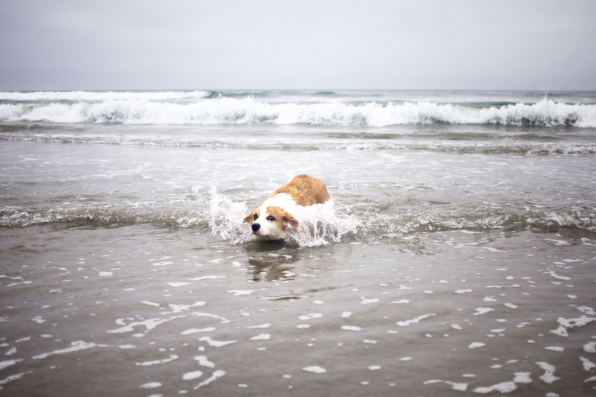 Orange-County-Dog-Photography-Pet-Huntington-Dog-Beach-SoCal-Corgi-Beach-Day_Steamer-Lee_056.JPG