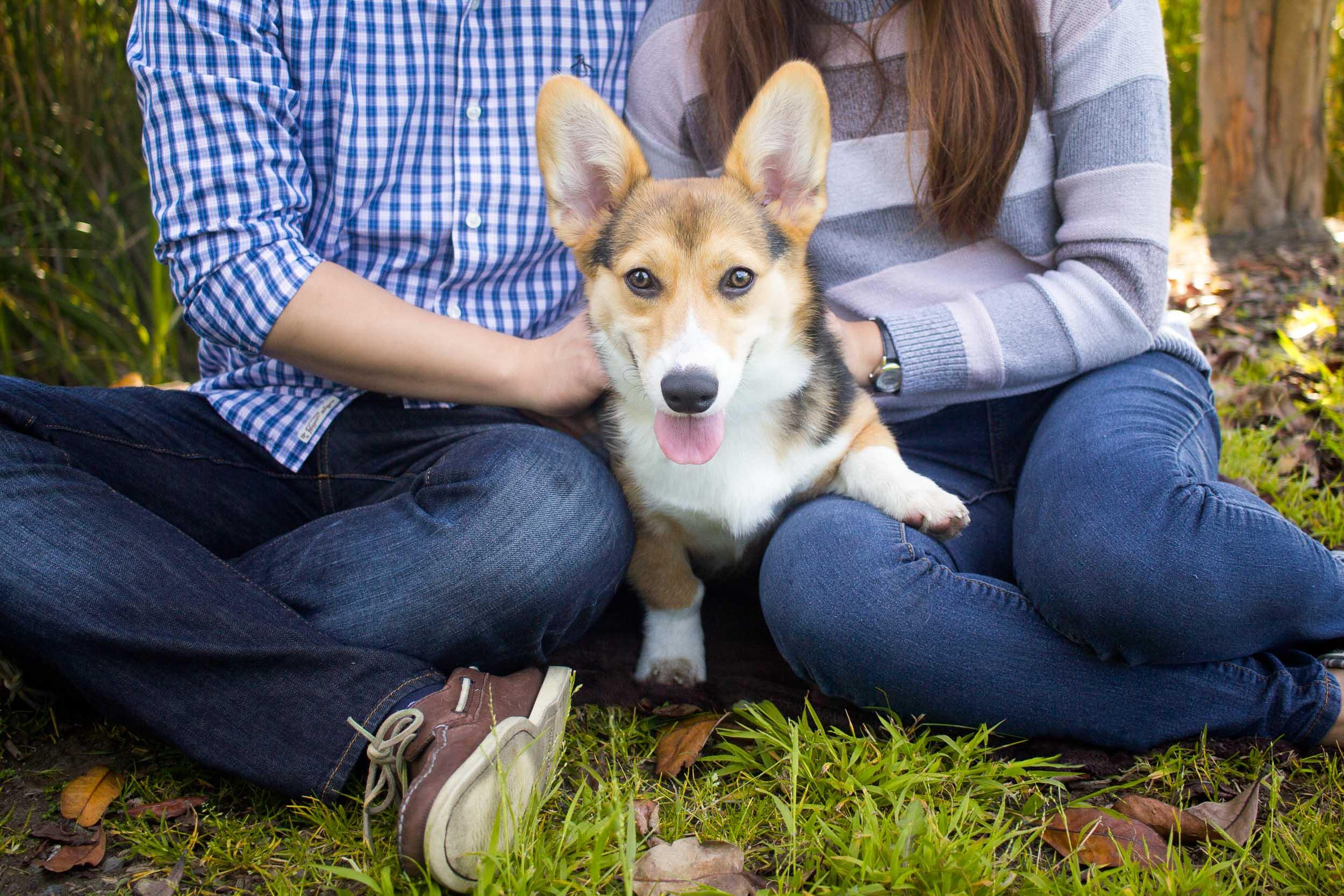 Steamer Lee Dog Photography -14.jpg