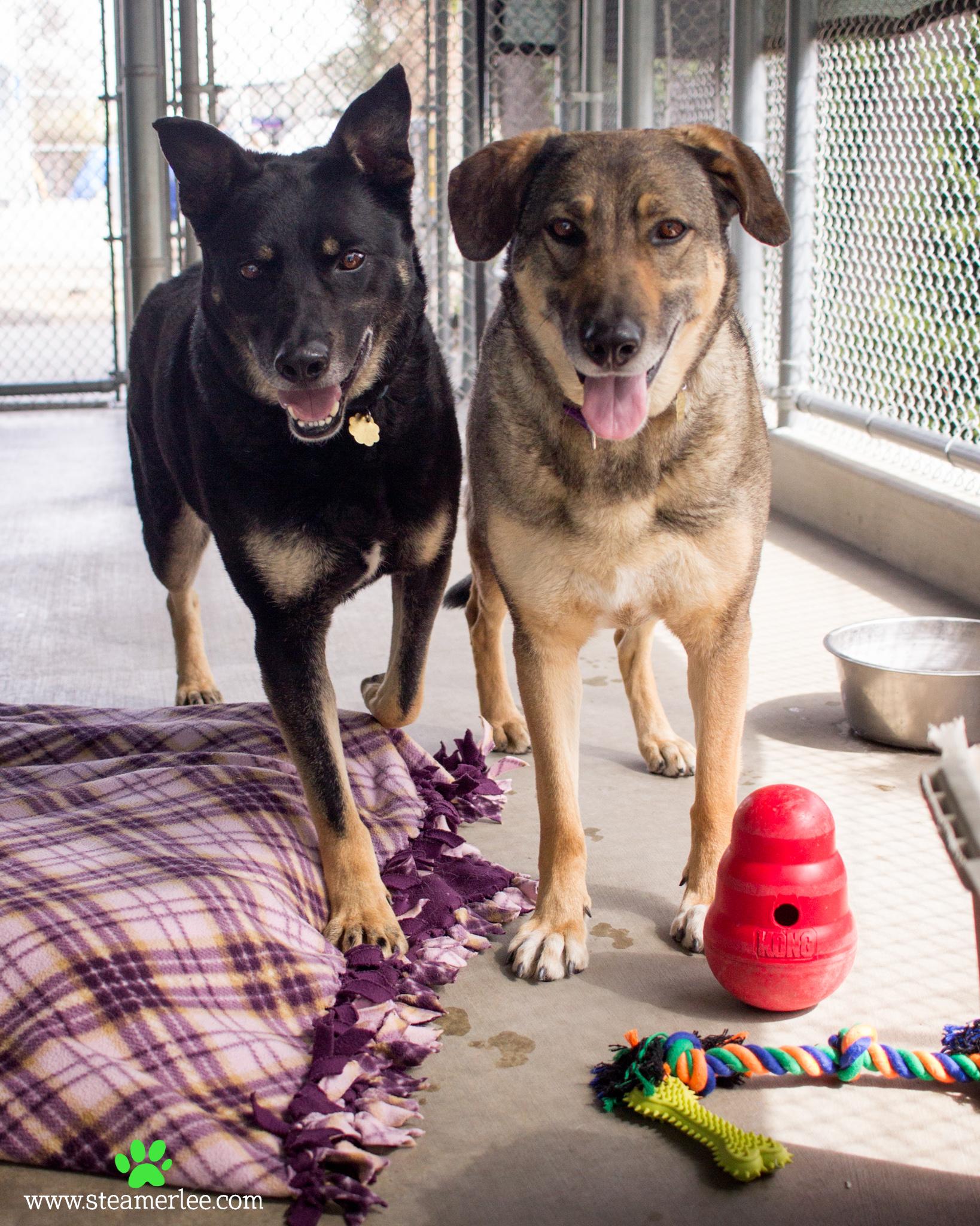199 Orange County Dog Photography - Steamer Lee - Southern California.JPG