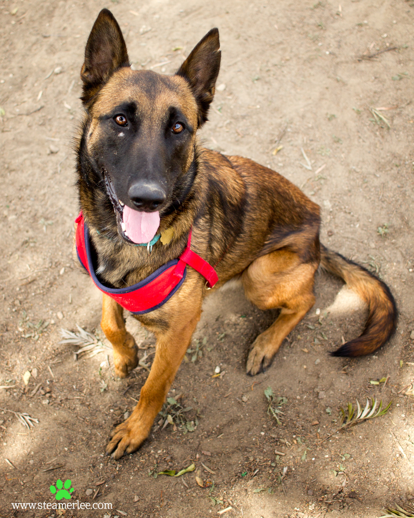 213 Orange County Dog Photography - Steamer Lee - Southern California.JPG