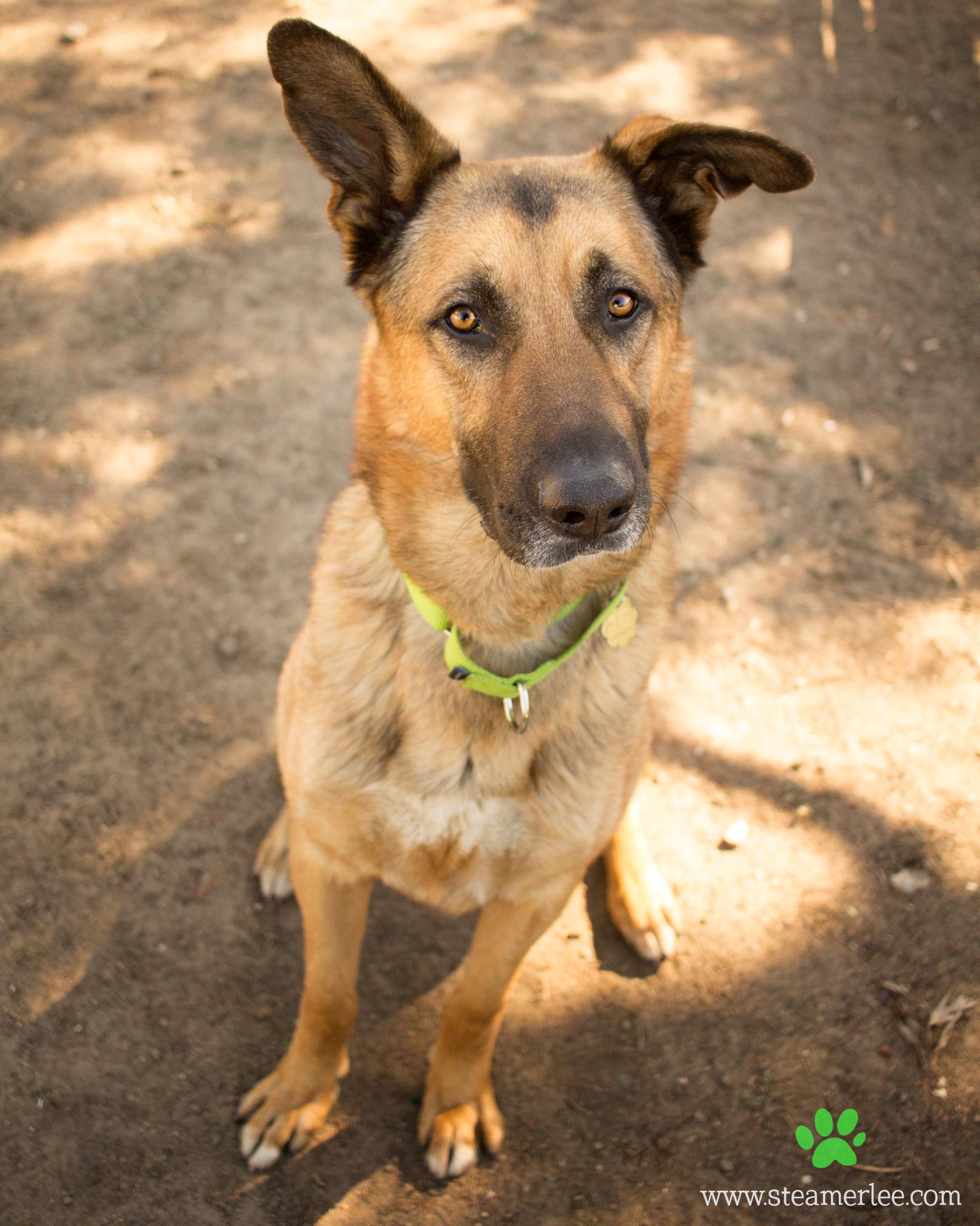 174 Orange County Dog Photography - Steamer Lee - Southern California.JPG