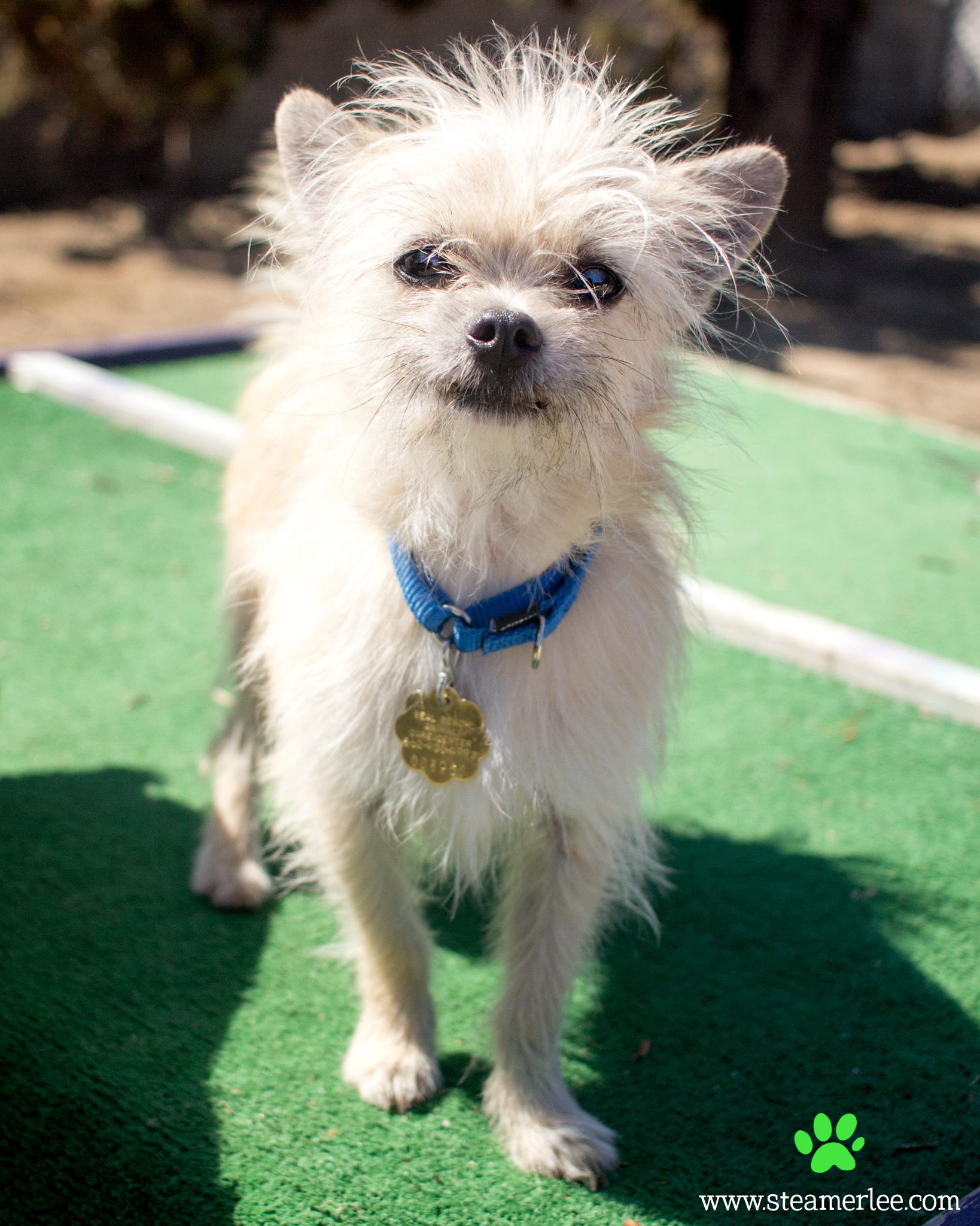 182 Orange County Dog Photography - Steamer Lee - Southern California.JPG