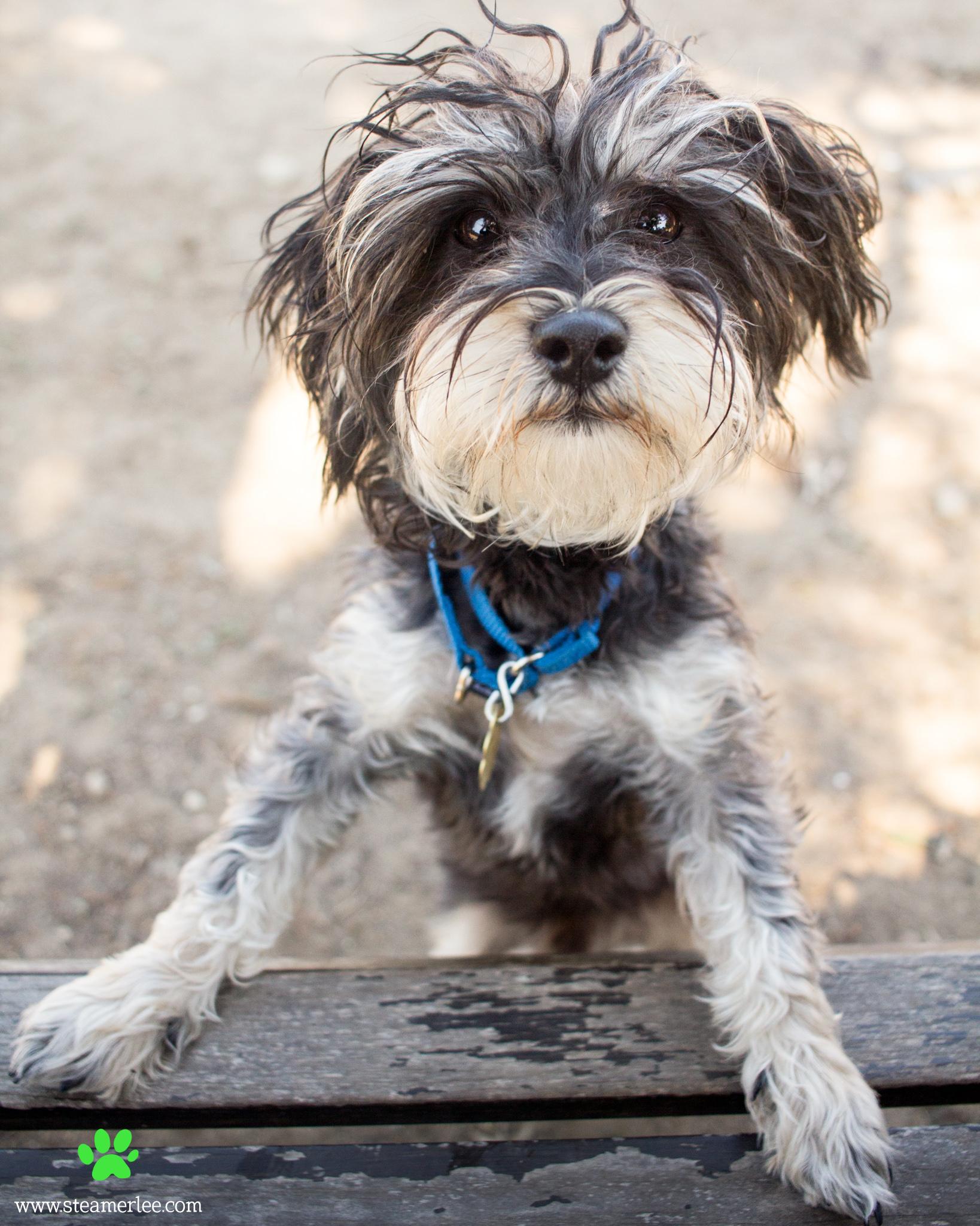 184 Orange County Dog Photography - Steamer Lee - Southern California.JPG