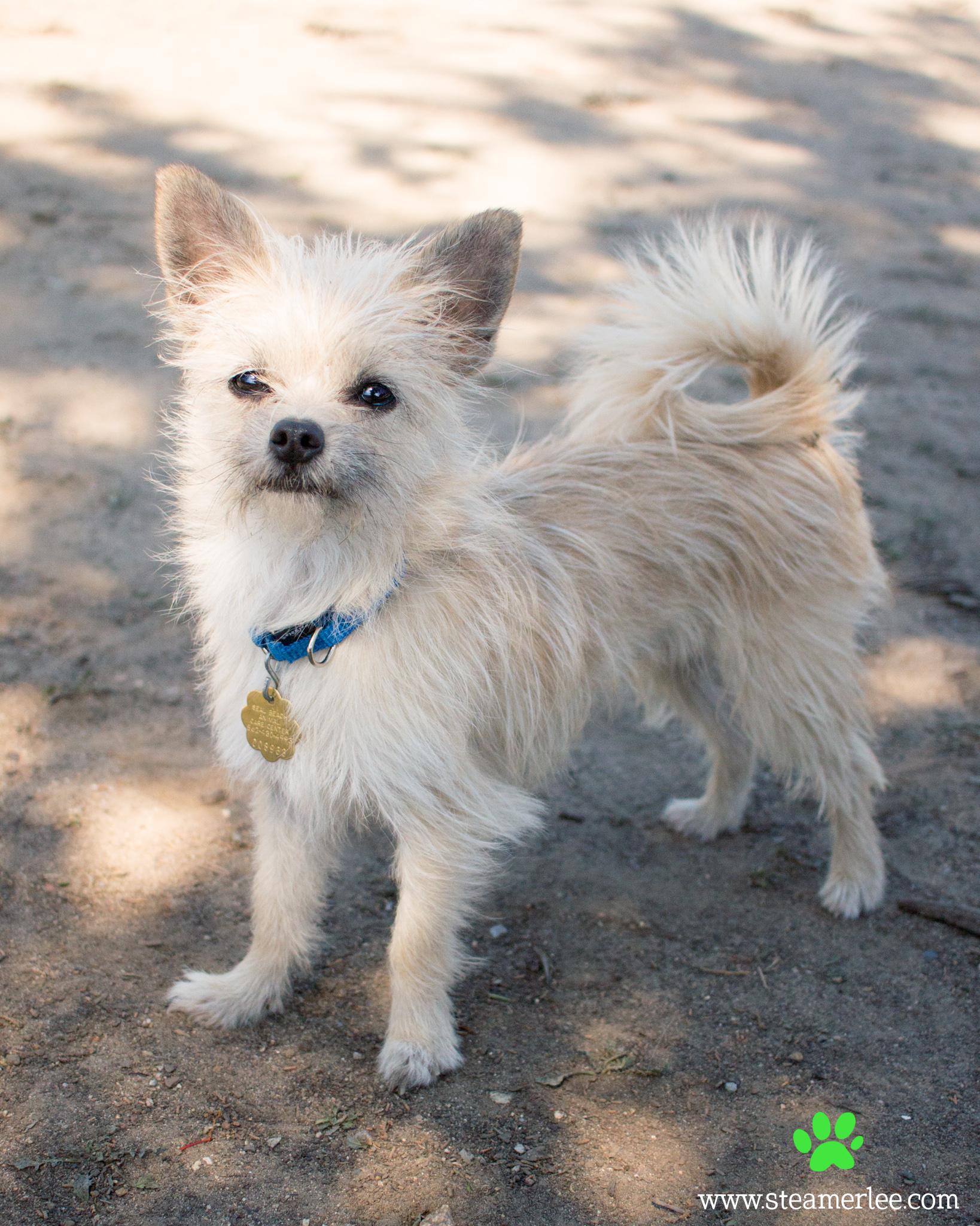 186 Orange County Dog Photography - Steamer Lee - Southern California.JPG