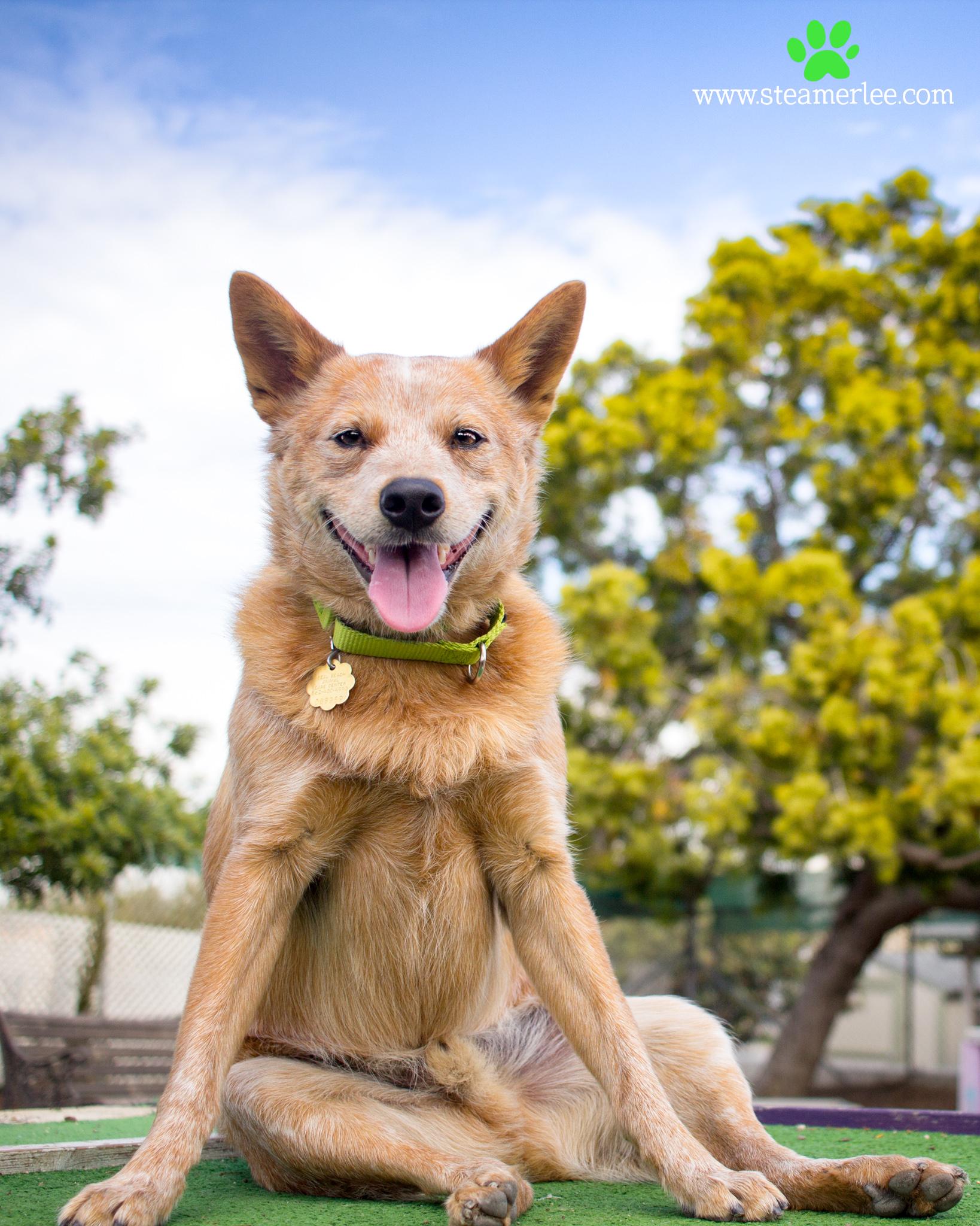 233-Orange-County-Dog-Photography-Steamer-Lee-Southern-California-SBACC.JPG