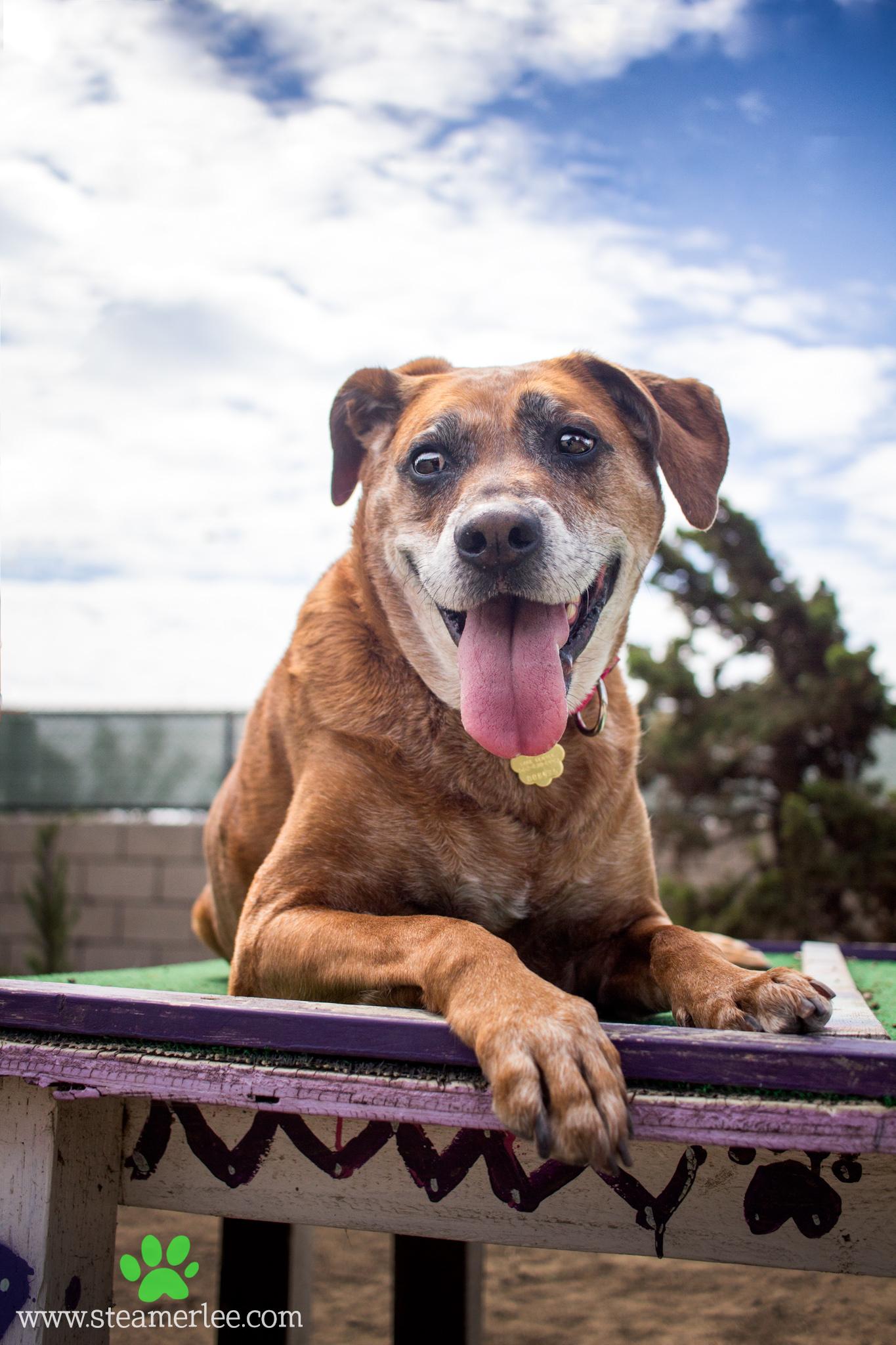 246-Orange-County-Dog-Photography-Steamer-Lee-Southern-California-SBACC.JPG