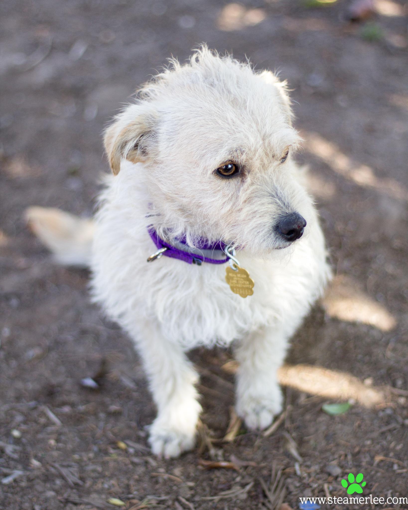 252-Orange-County-Dog-Photography-Steamer-Lee-Southern-California-SBACC.JPG
