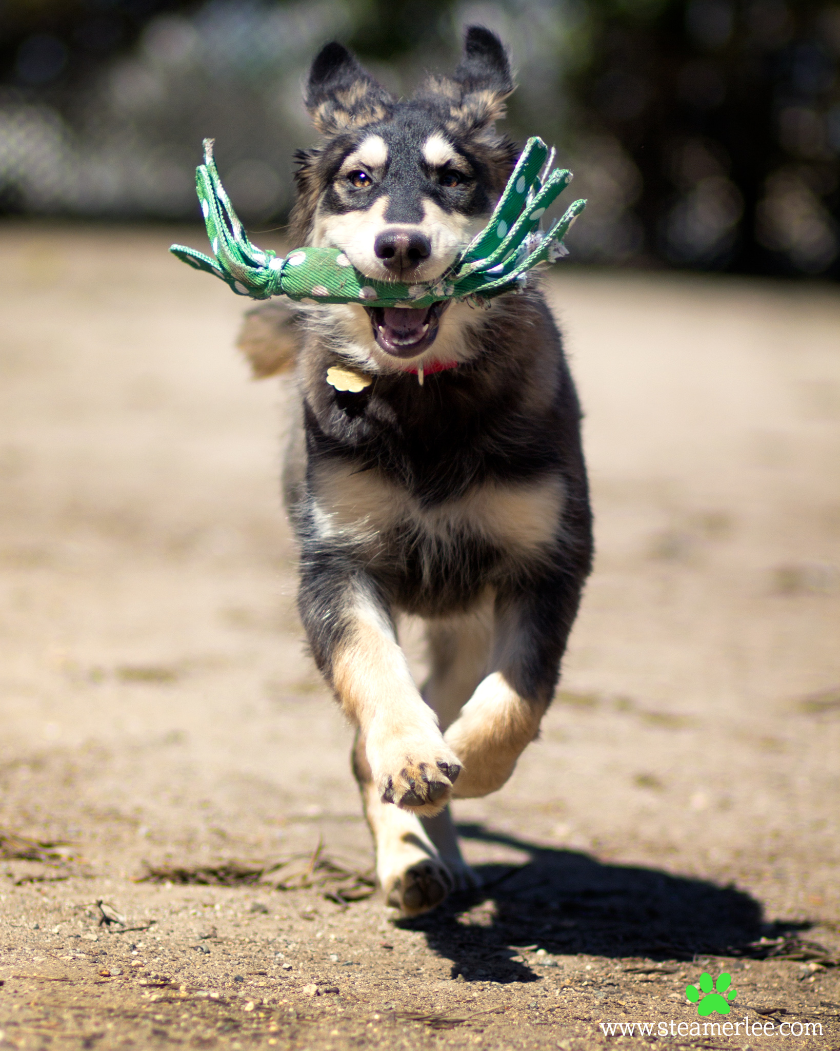 258-Orange-County-Dog-Photography-Steamer-Lee-Southern-California-SBACC.JPG