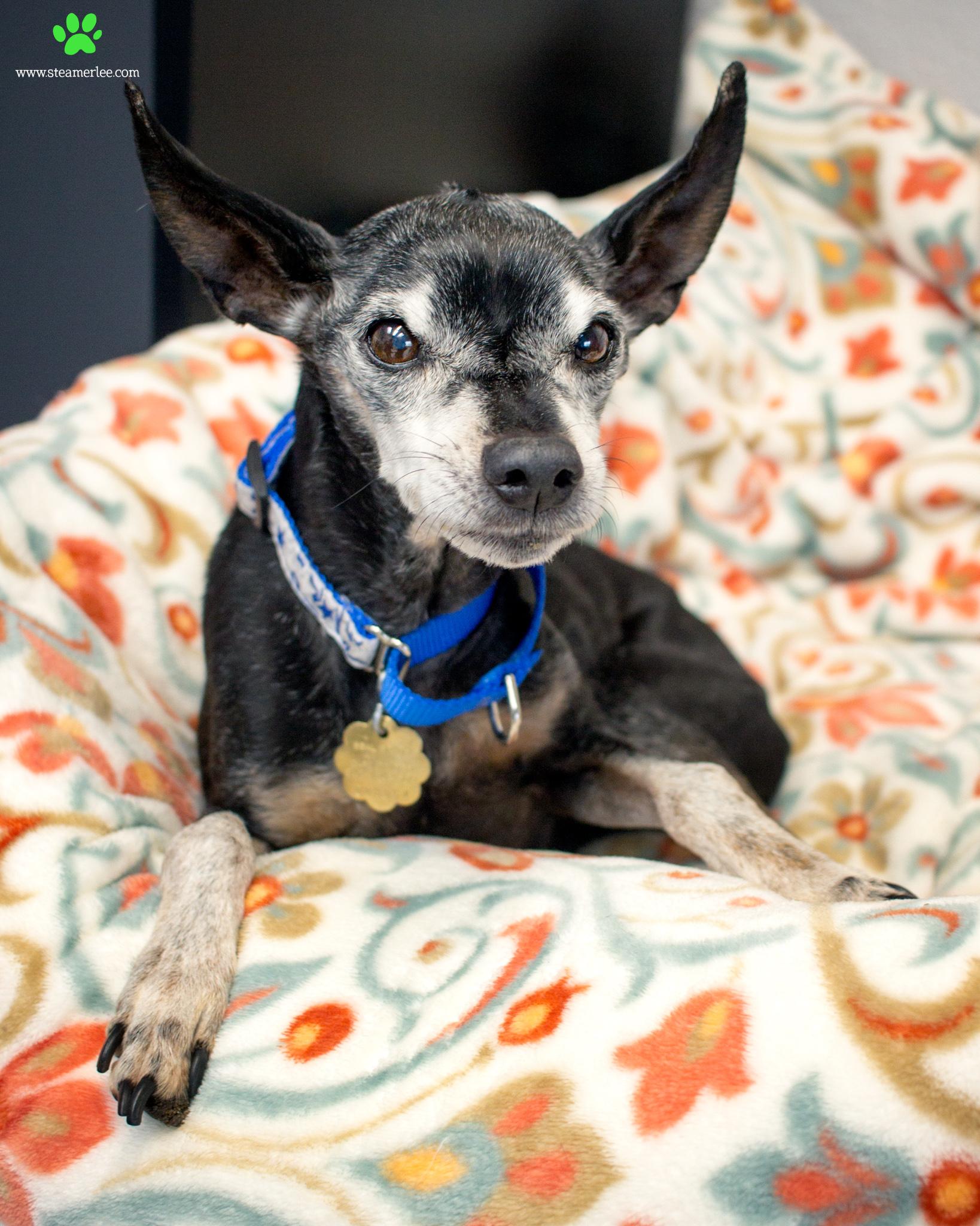 273-Orange-County-Dog-Photography-Steamer-Lee-Southern-California-SBACC.JPG