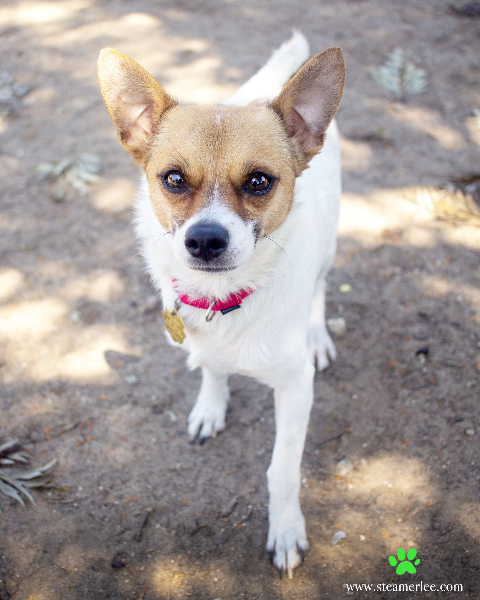 285-Orange-County-Dog-Photography-Steamer-Lee-Southern-California-SBACC.JPG